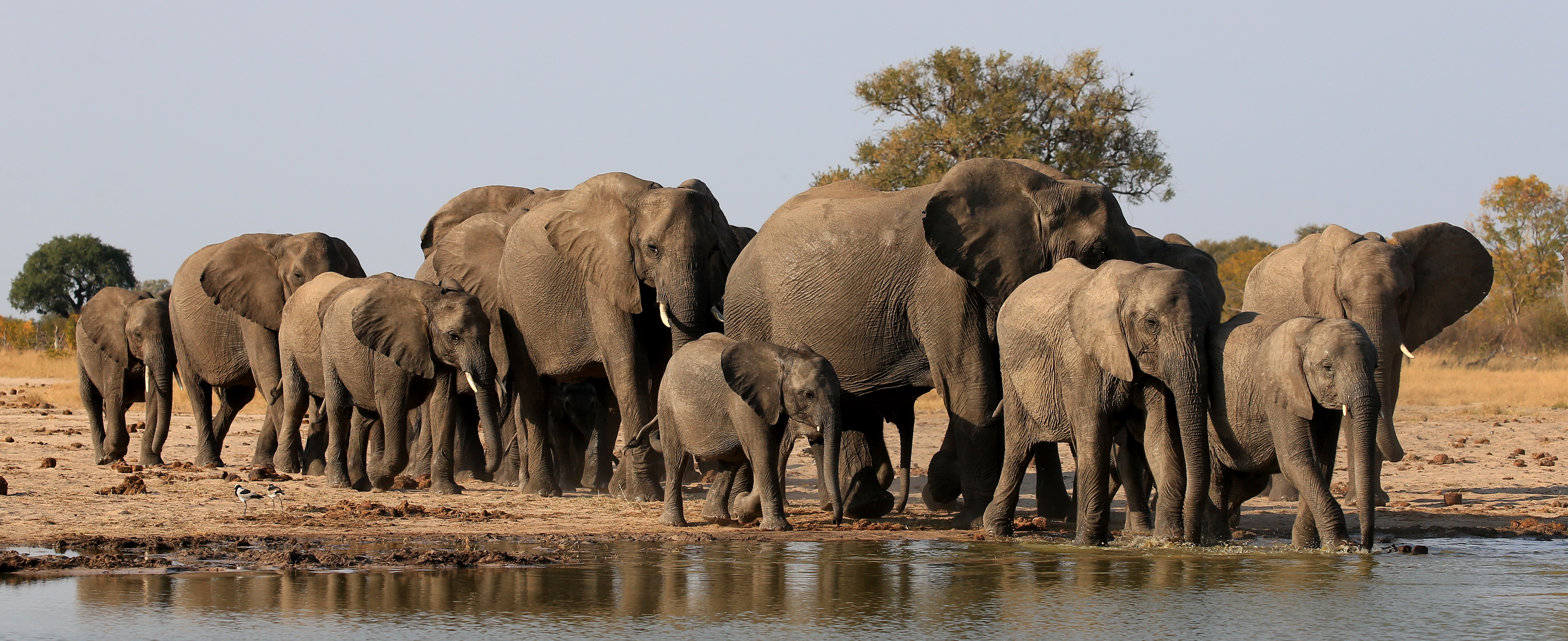 PRESS RELEASE: Elephant Experts From Around the World Oppose ...