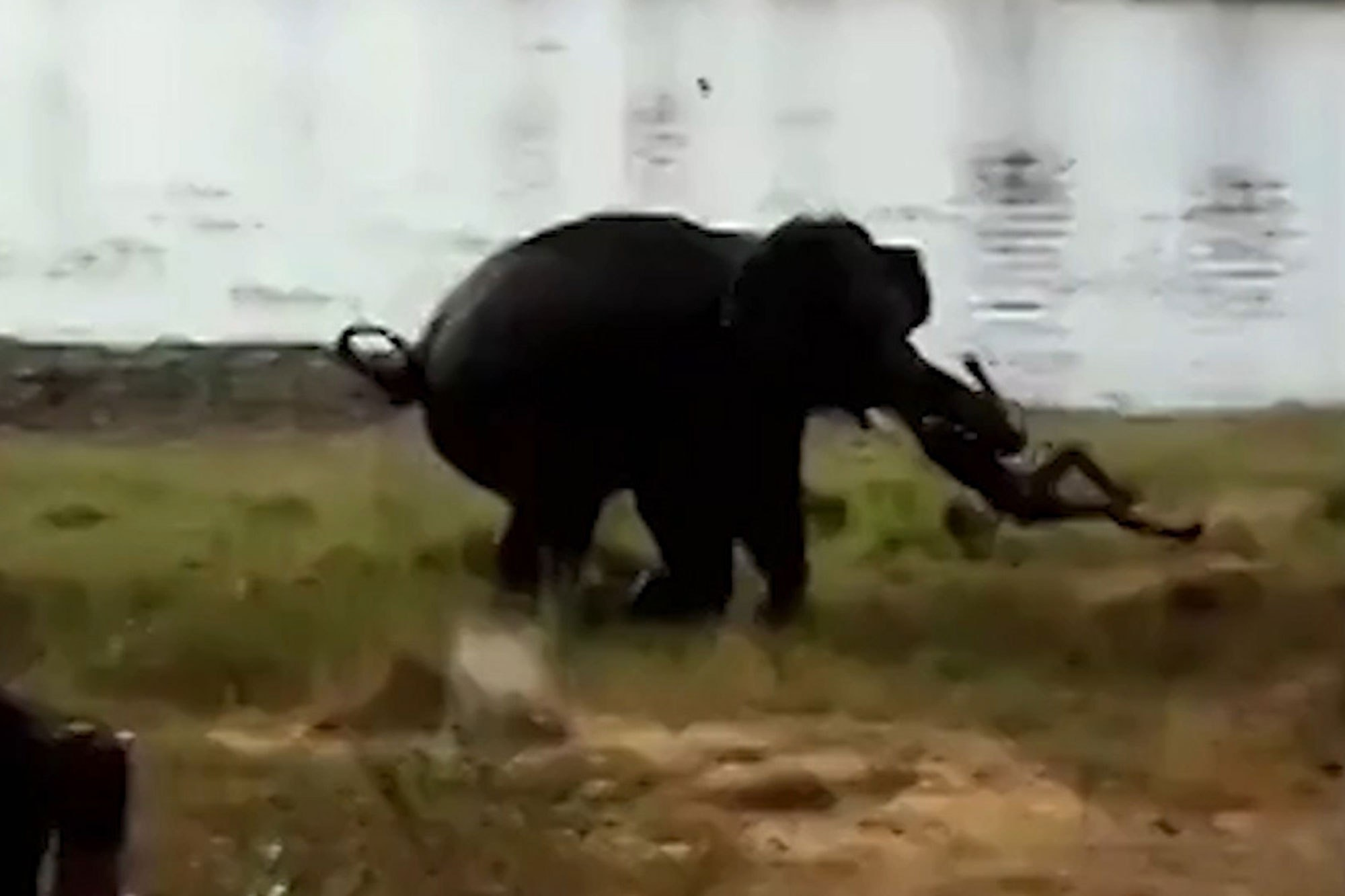Video: 56-year-old man violently killed during elephant attack | New ...