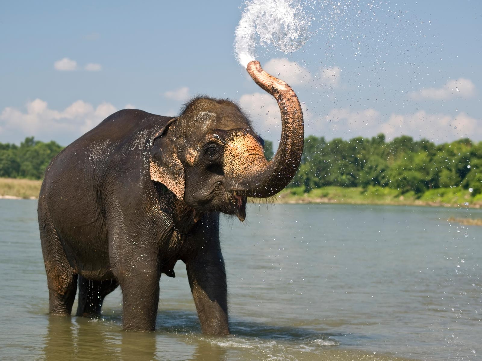 Elephant in water photo