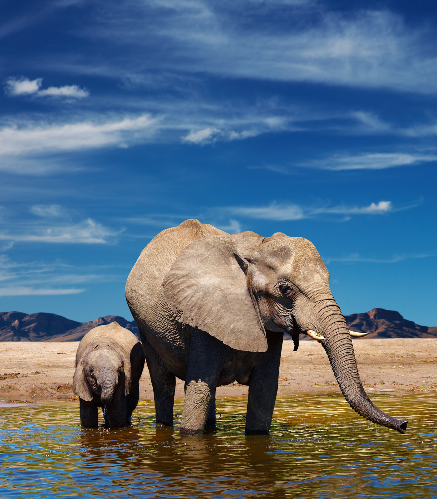 The elephant in the river water baby elephant 50836 - Animal ...