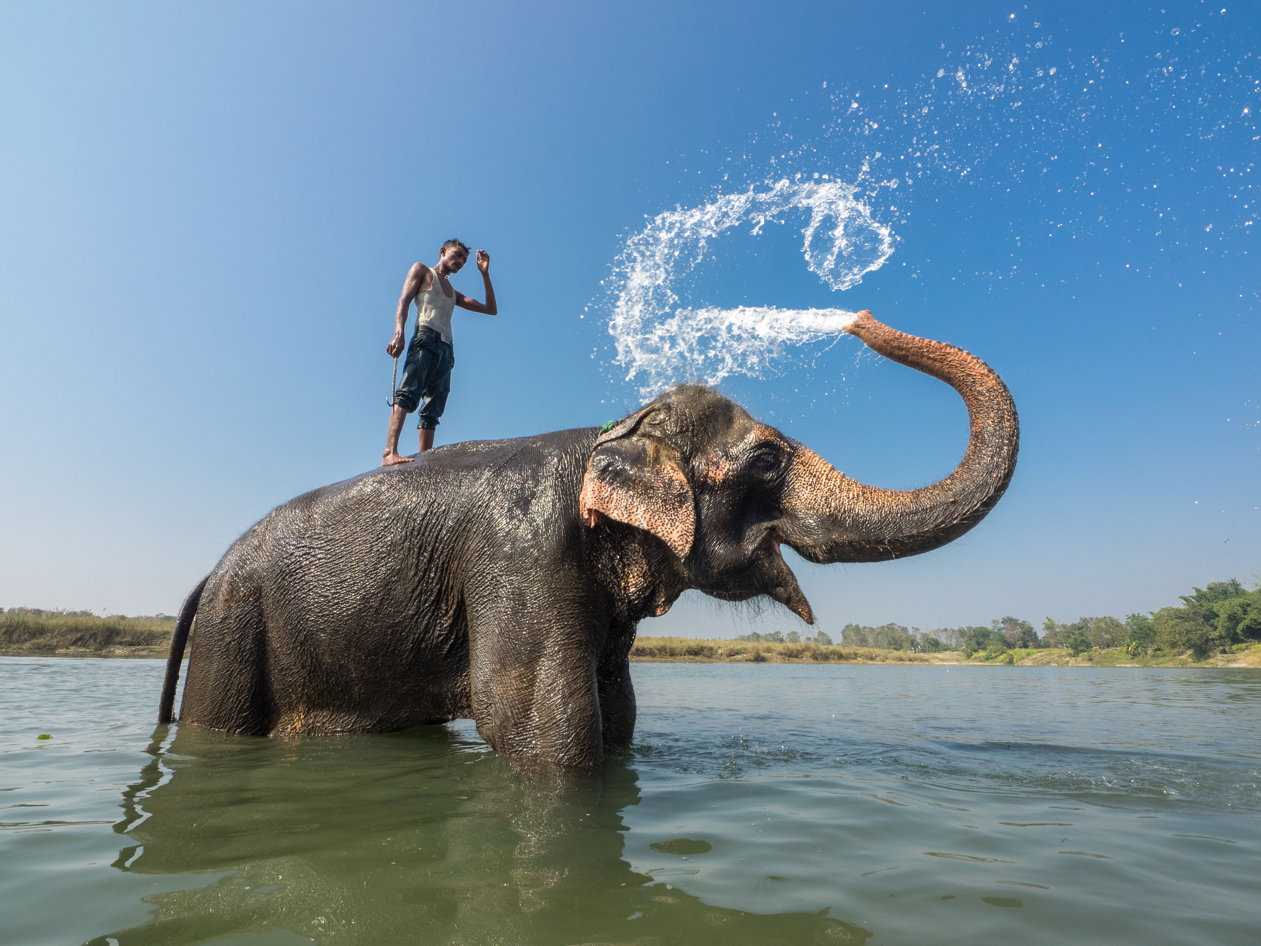 Stunning pictures show man and elephant taking a 'shower'