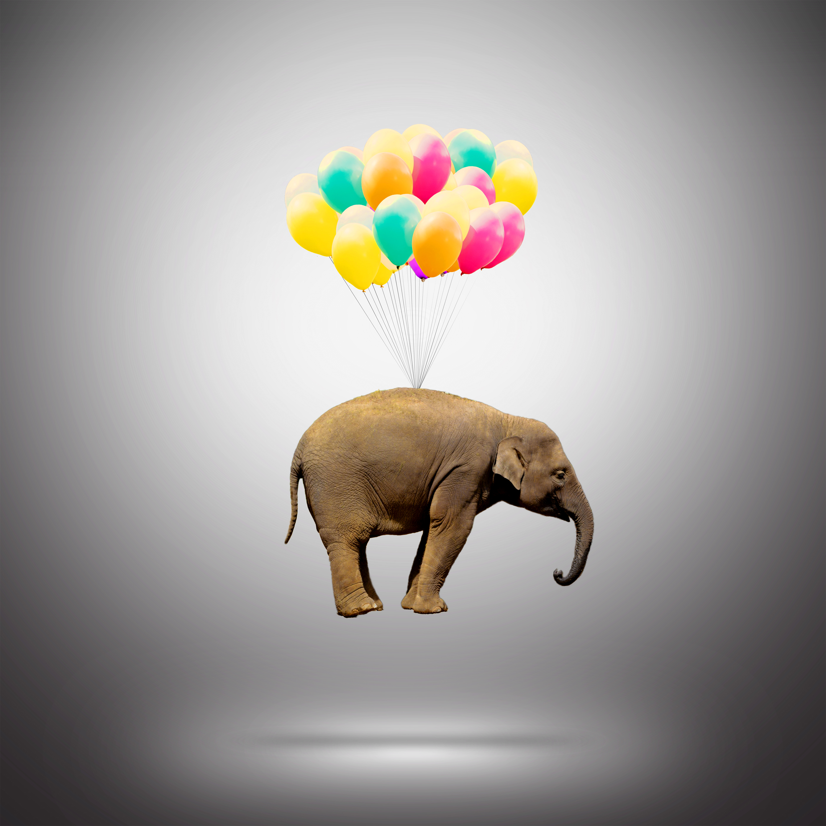 Elephant Lifted by Balloons - Achievement Concept, Abstract, Perfection, Shine, Scene, HQ Photo