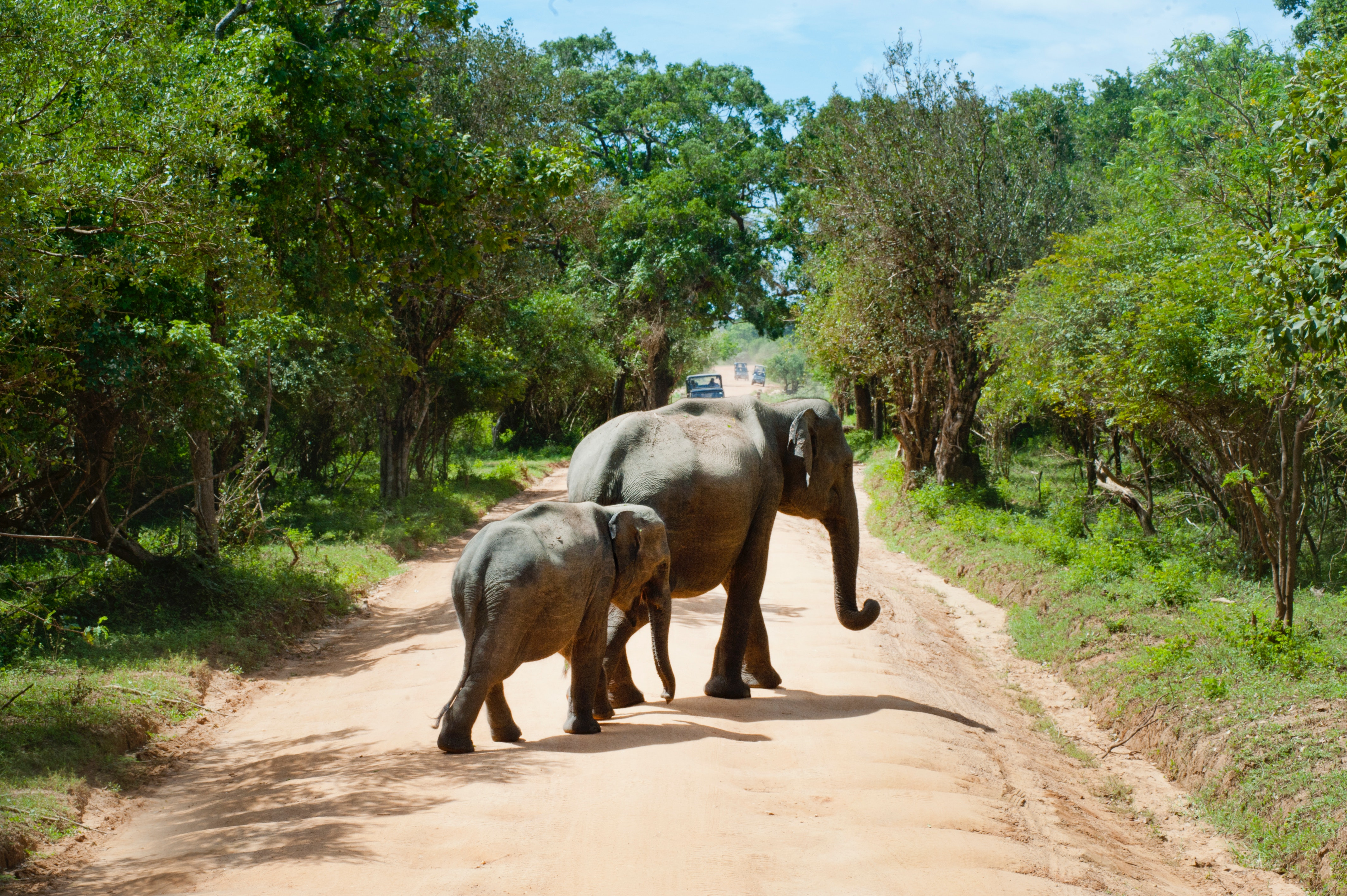 Elephant Walking, Agriculture, Woods, Wild, Tropical, HQ Photo