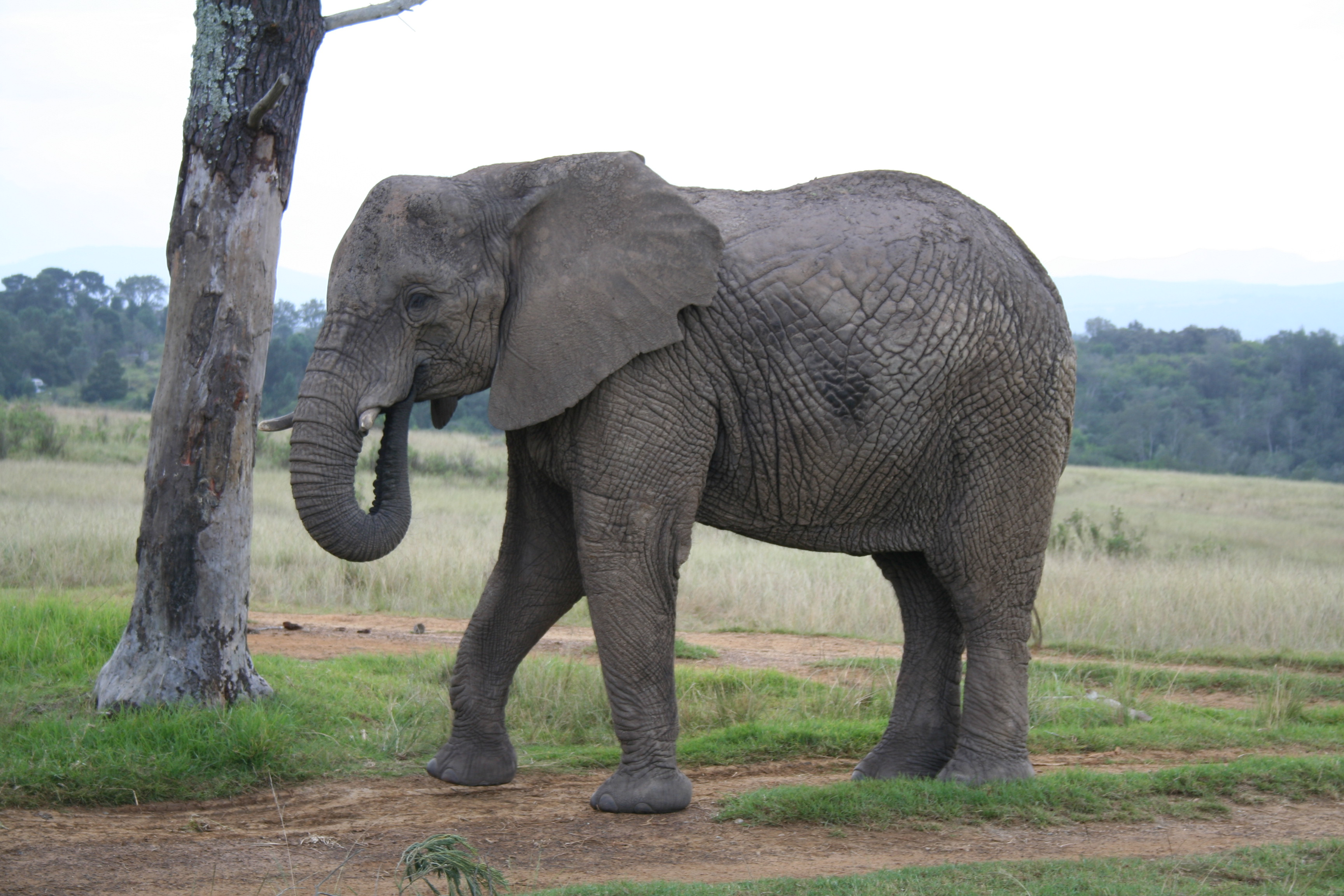 Elephant, Africa, Safari, South, Wild, HQ Photo