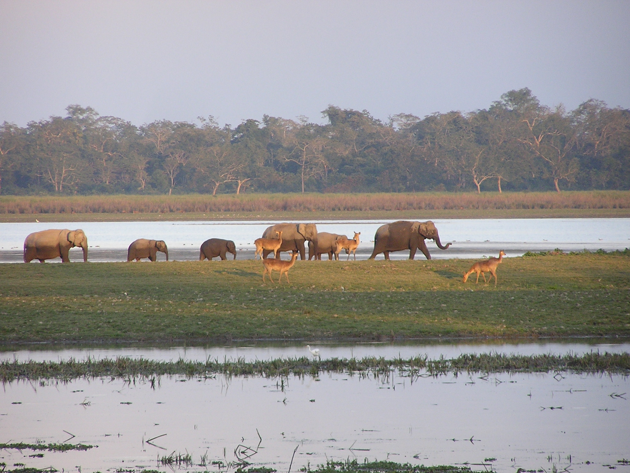 Elephants and Deer back in home at Dusk, African, Resource, South, Smiling, HQ Photo