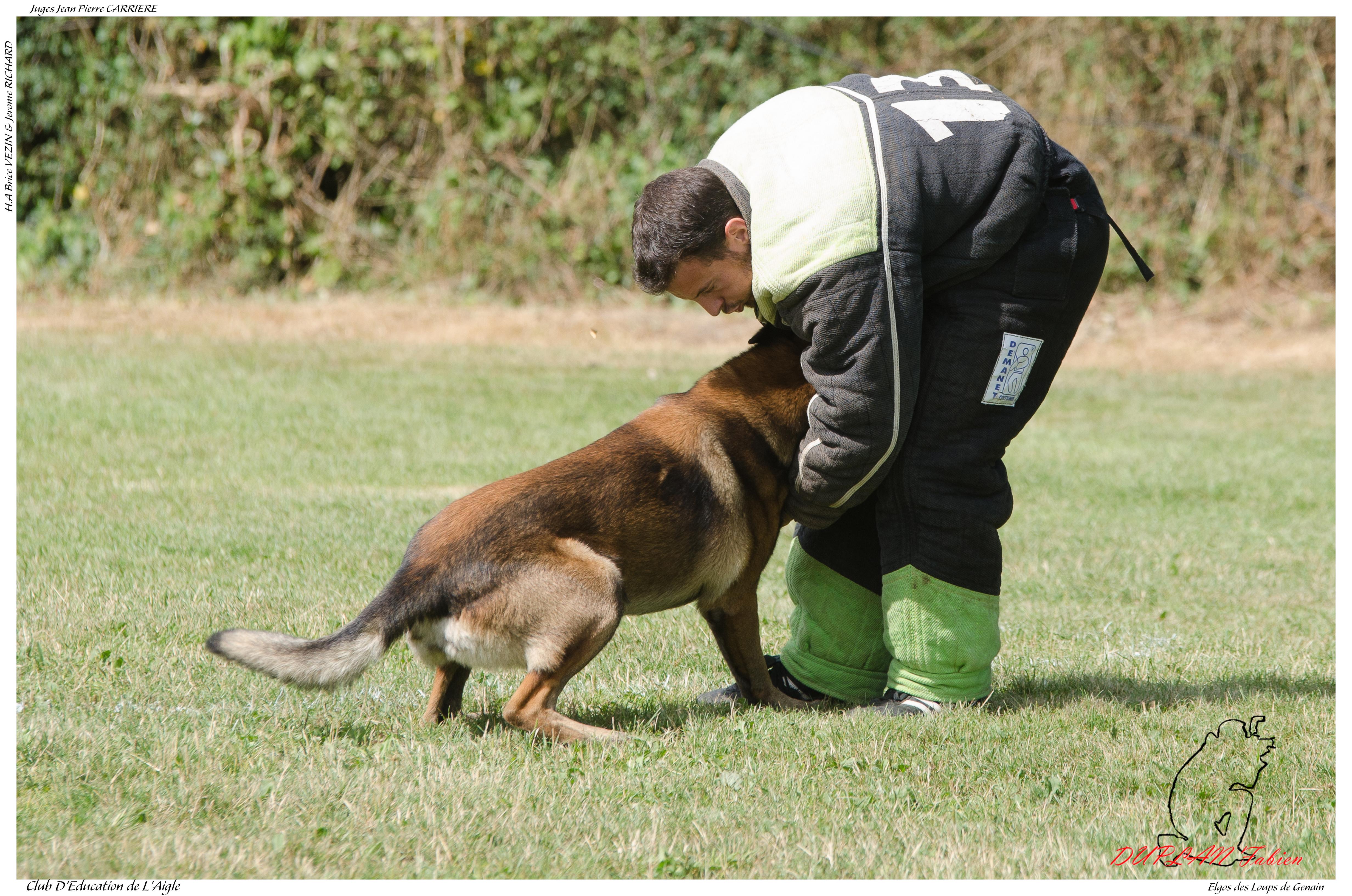 Elgos des Loups de Genain DUPLAN E - -3502, pet, outdoor, dog, animal, HQ Photo