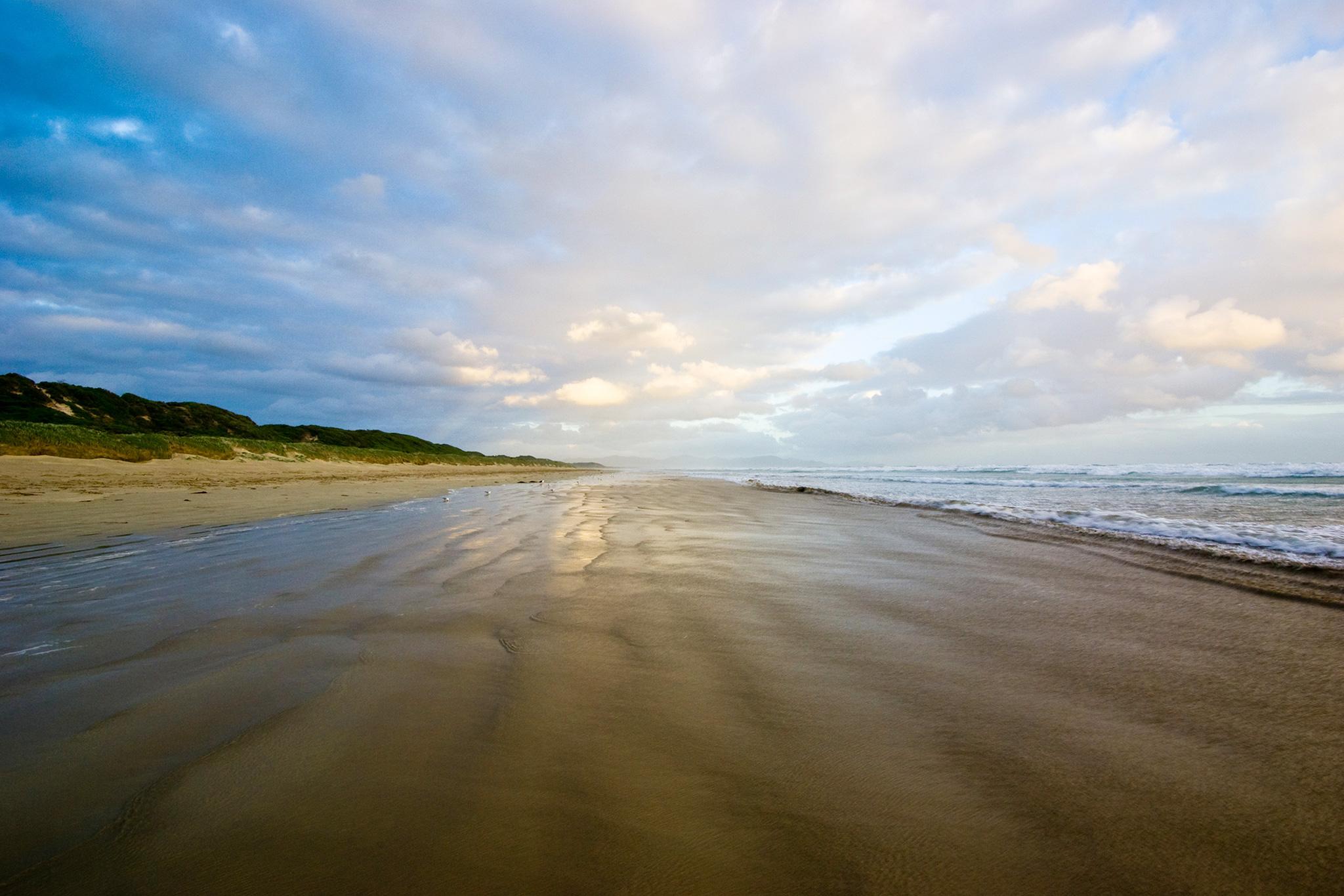 An Empty Beach Isn't Empty At All. – Phenomena: Curiously Krulwich