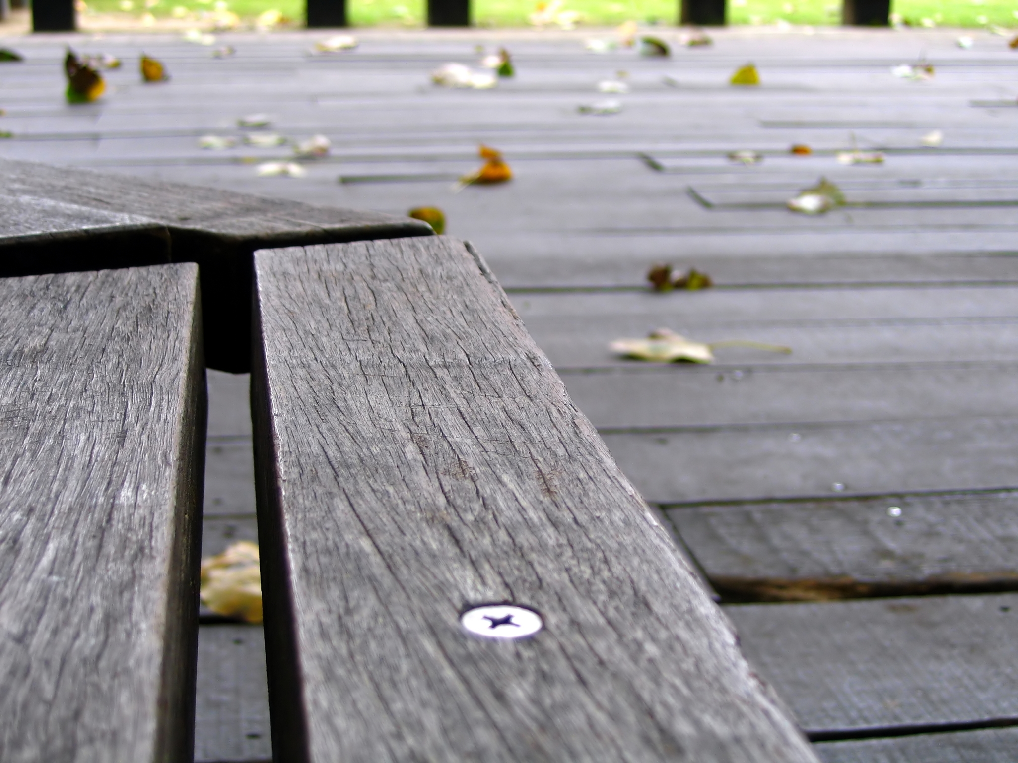 Empty bench and falling leaves photo