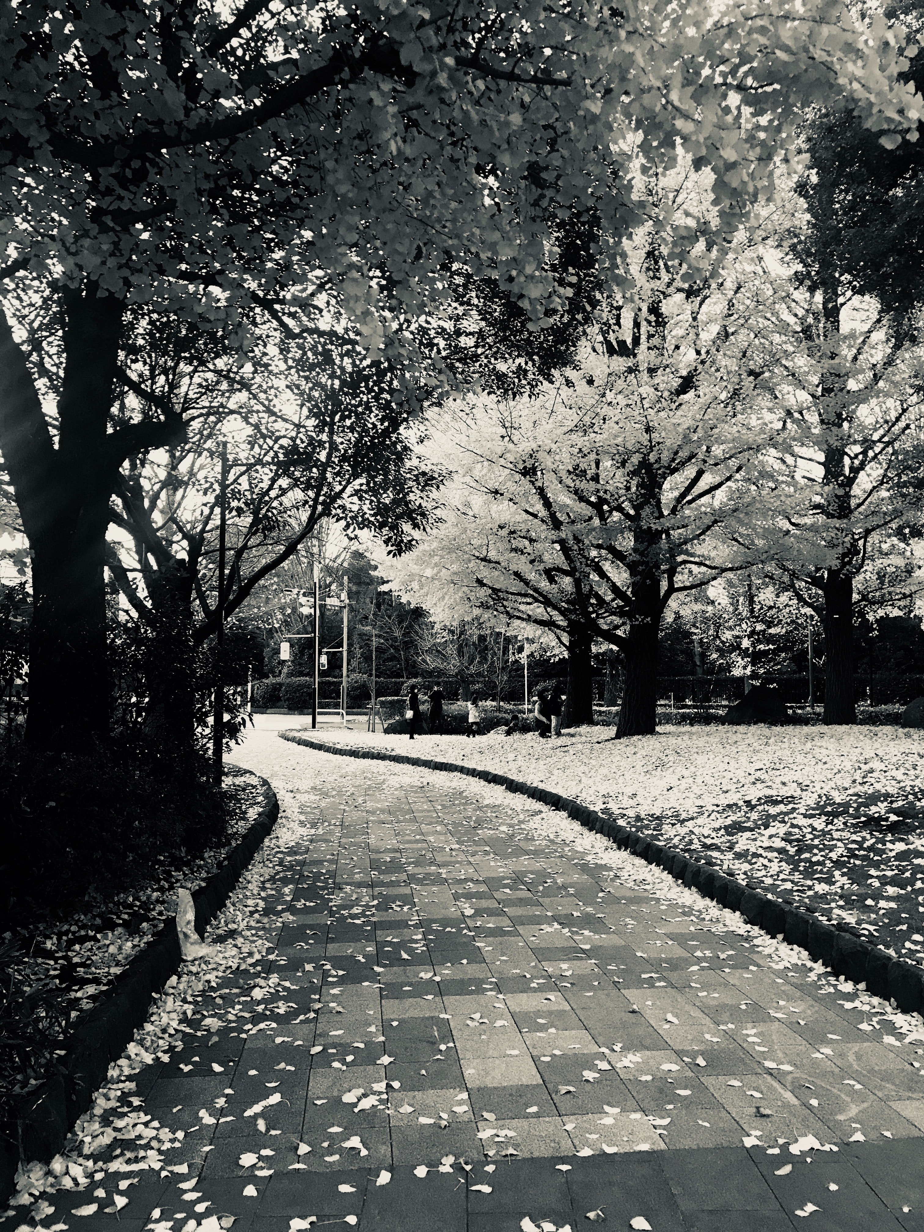 Free photo: Empty Garden Pathway - Alley, Pathway, Travel ...