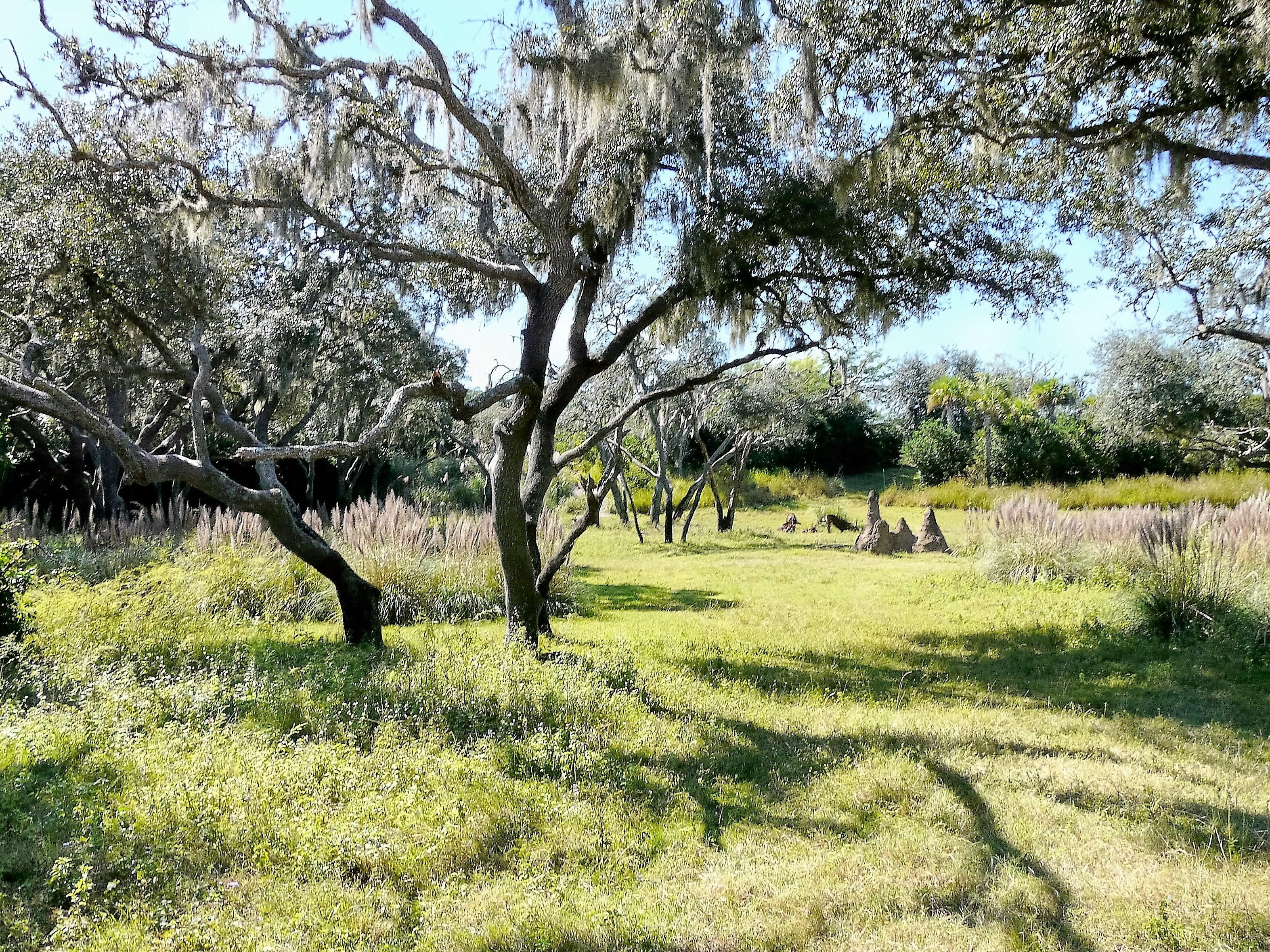 Empty Green Tall Trees, Rural, Wood, Trees, Tree, HQ Photo