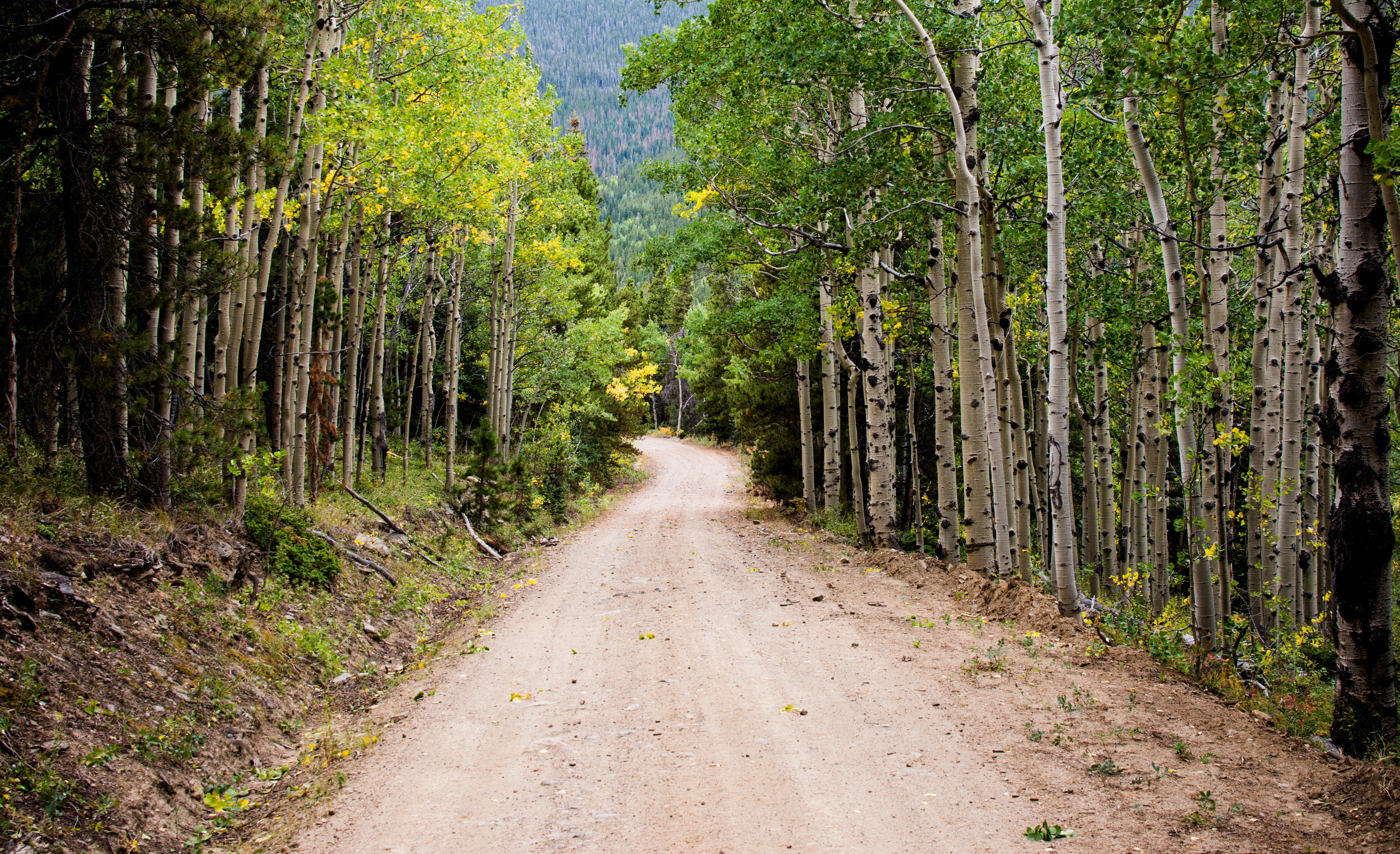 Empty road between birch trees during daytime photo