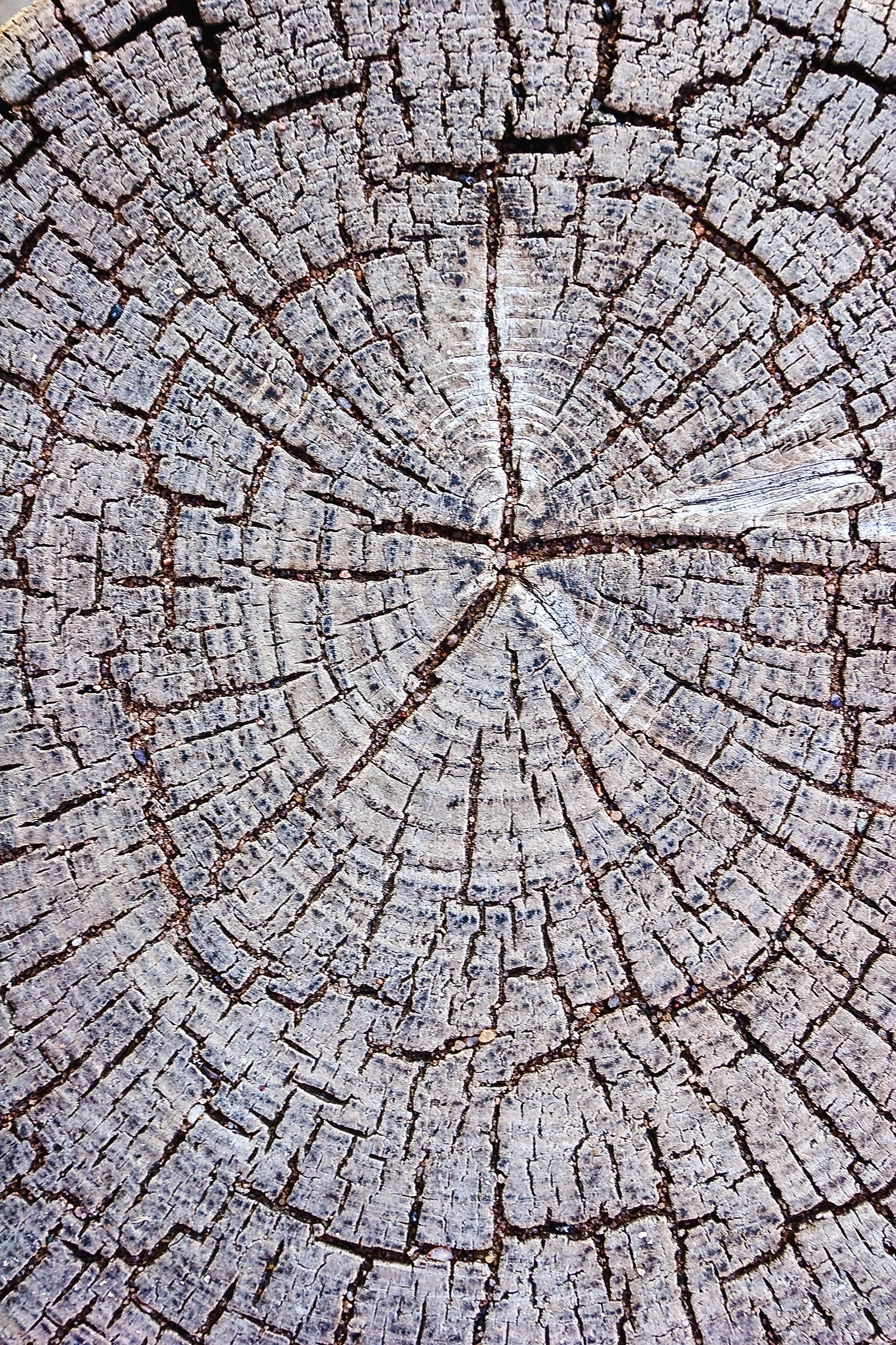 End Grain Texture, Brown, Cracked, Cracks, Dry, HQ Photo