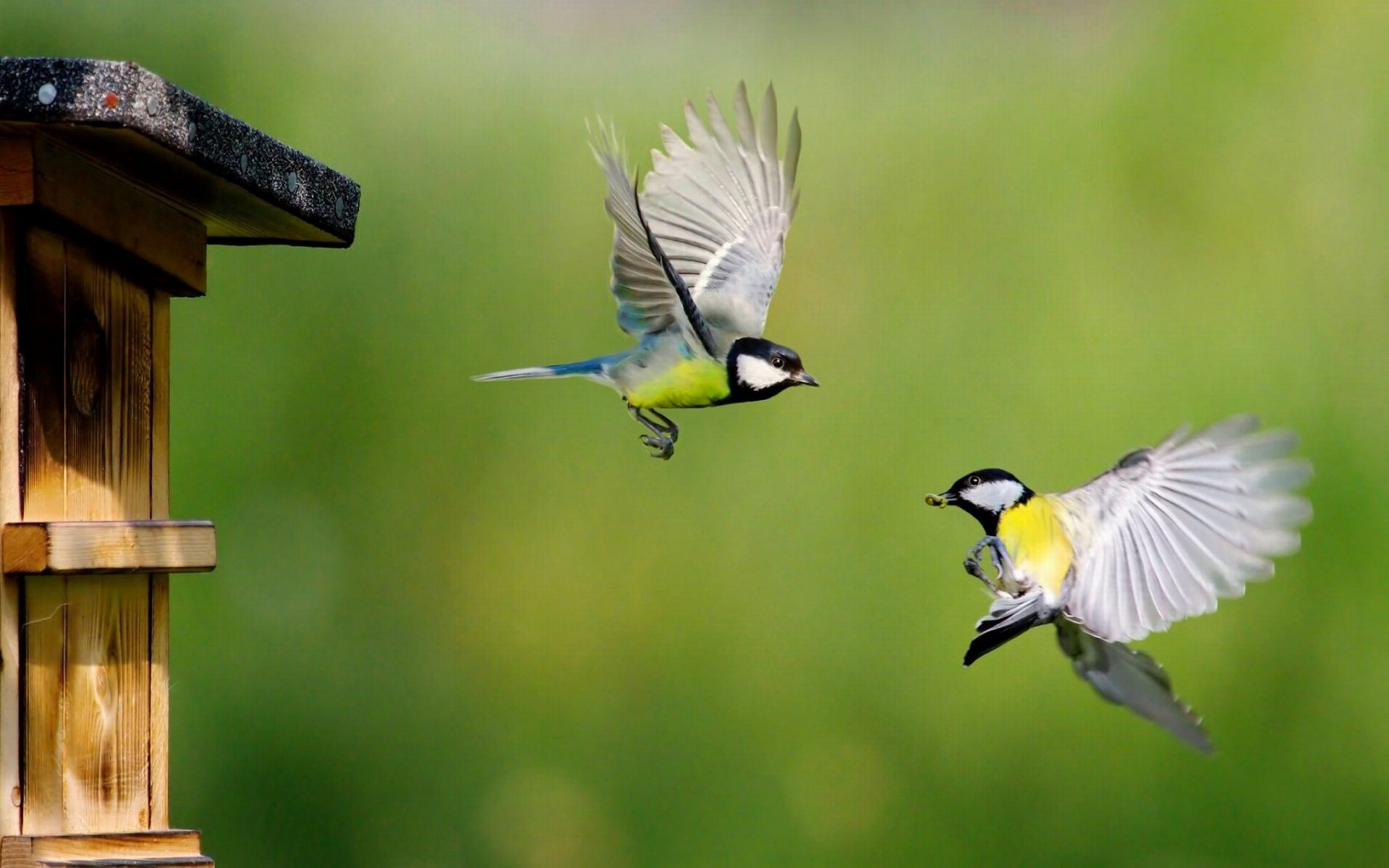 Eurasian Blue Tit Birds In Flight Hd Wallpapers For Mobile Phones ...
