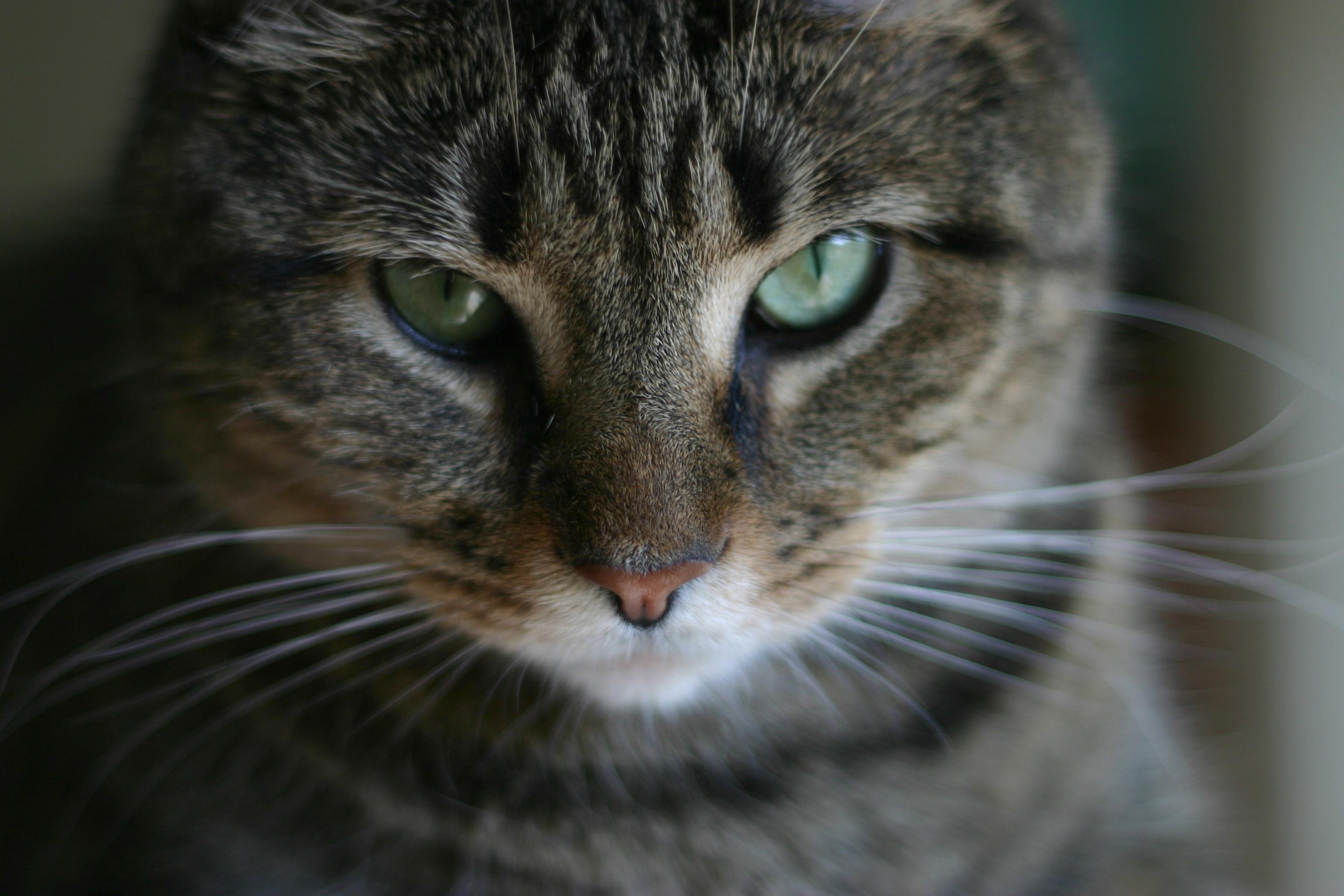 Evil stare photo