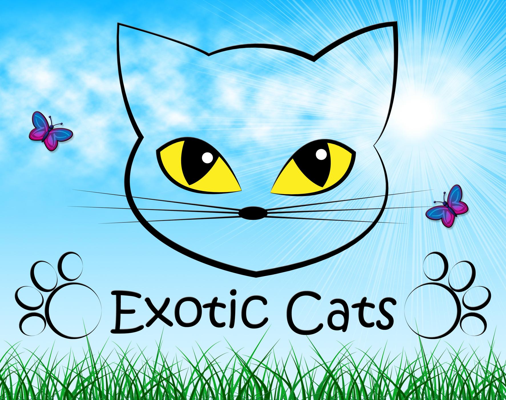 Exotic Cats Indicates Felines Unique And Unusual, Cat, Pedigree, Unique, Special, HQ Photo