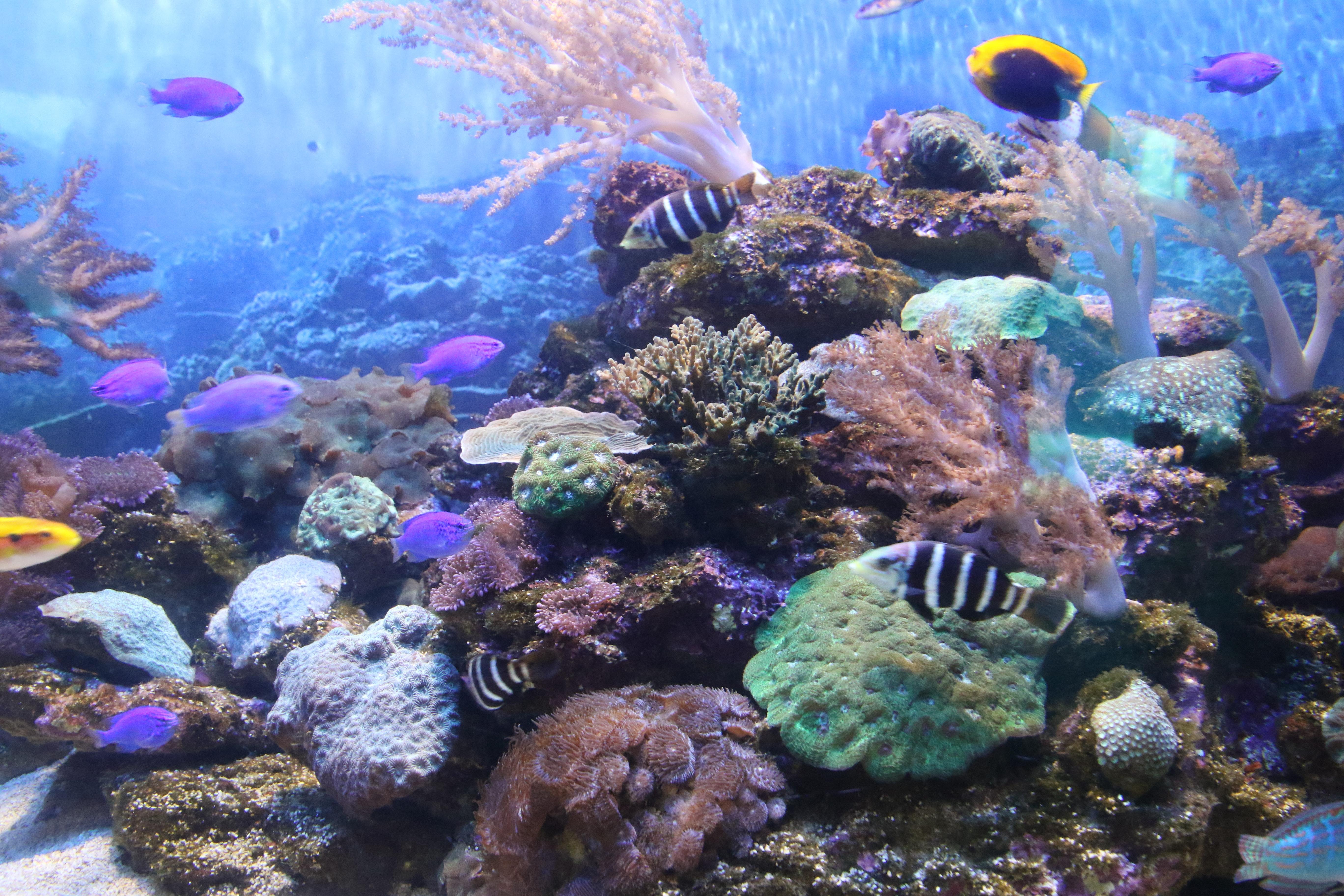 Exotic fish swimming in the sea photo