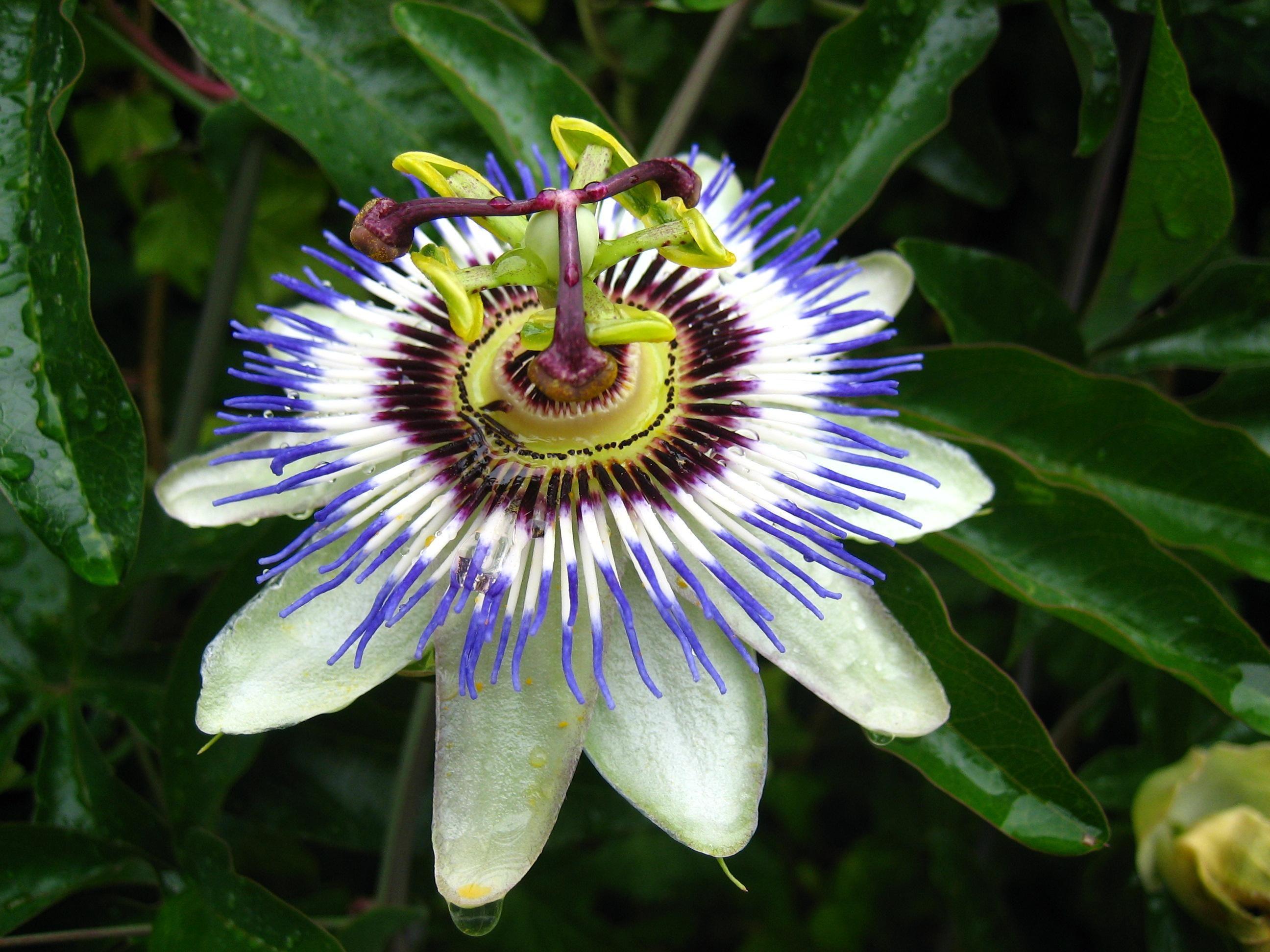 Exotic flowers photo