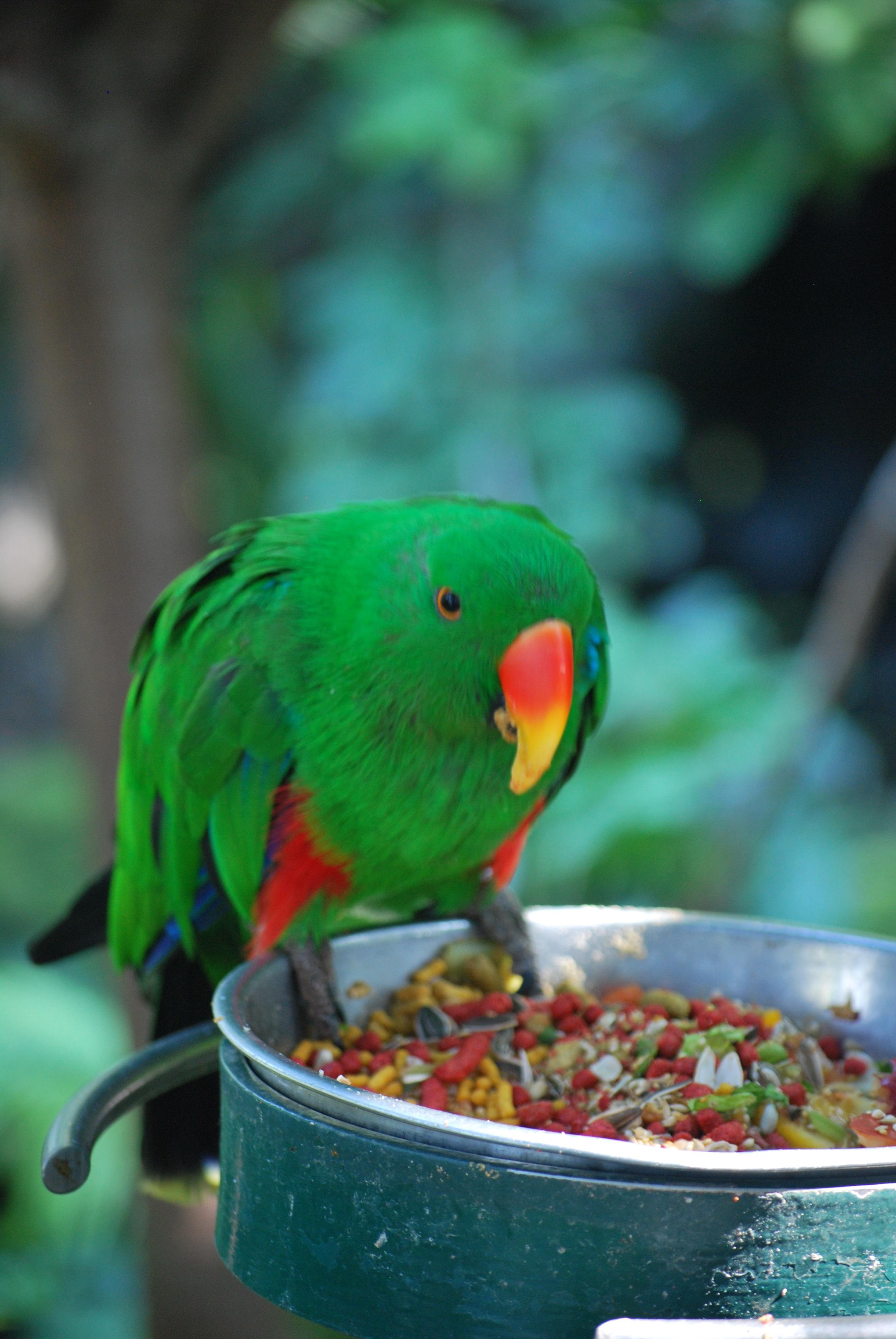 Exotic parakeet photo