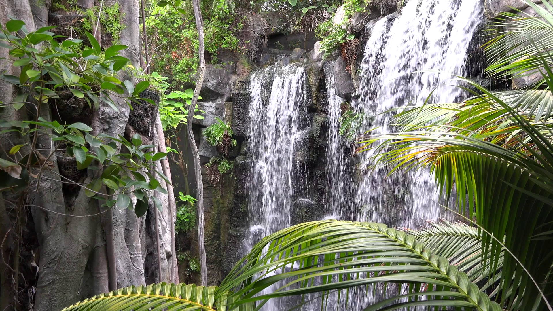 Exotic waterfall, fresh nature Stock Video Footage - Videoblocks
