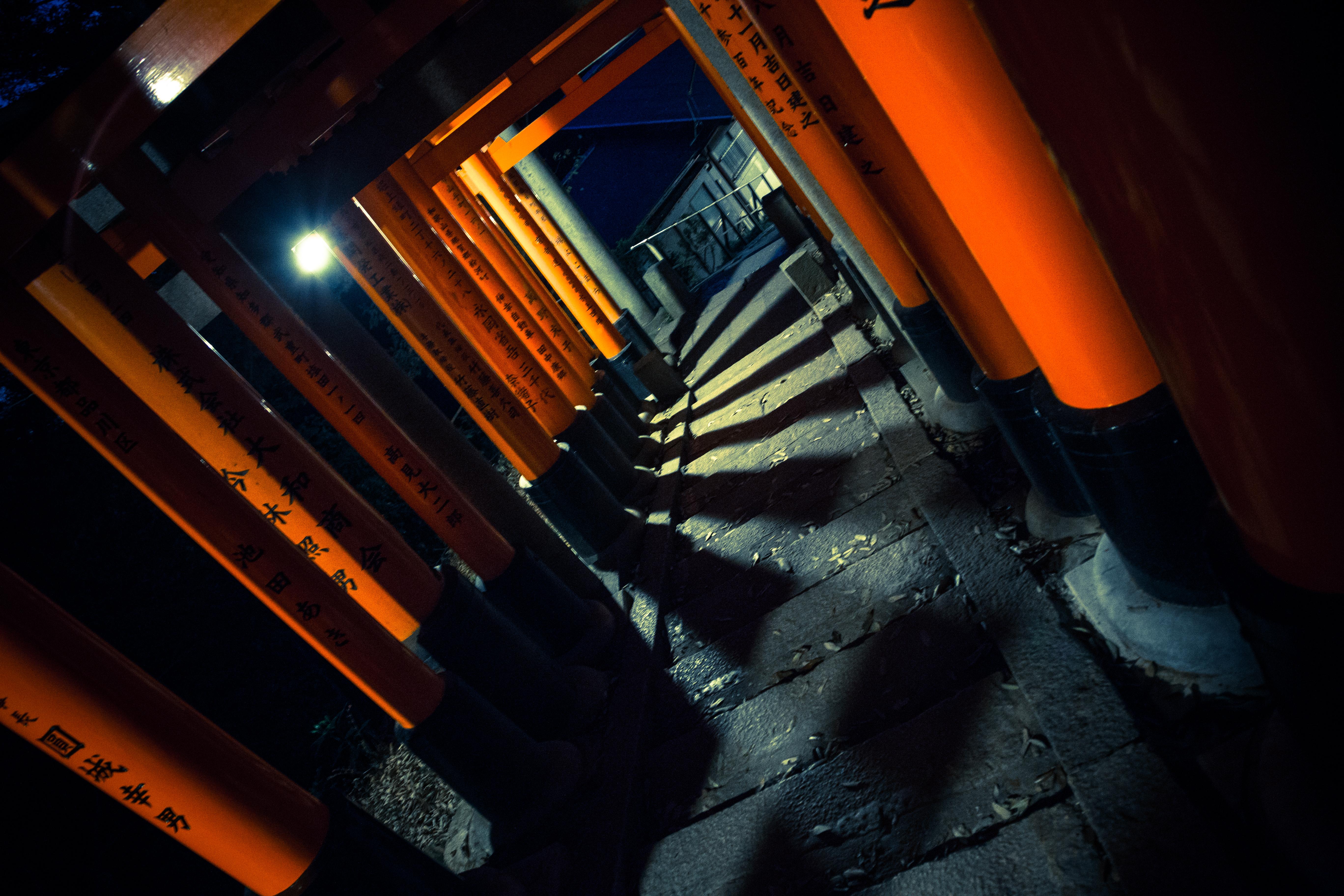 Exploring fushimi inari photo