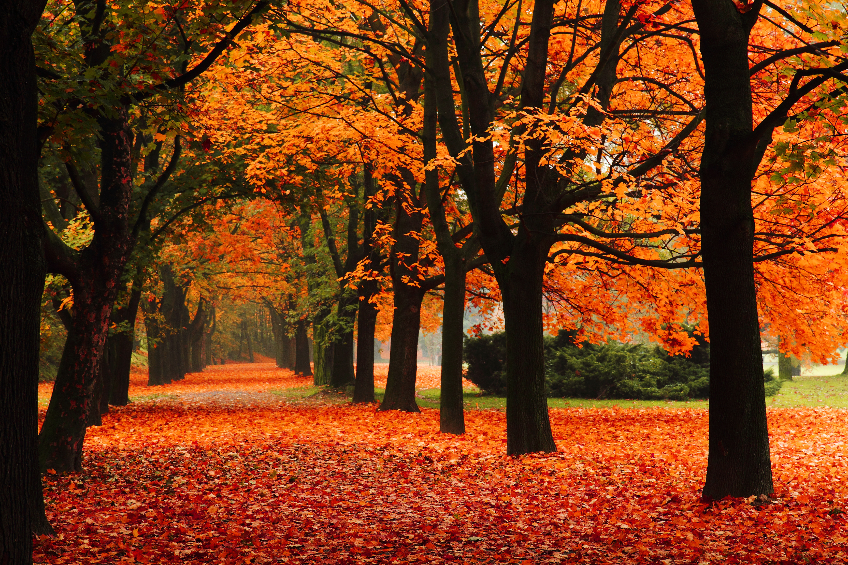 The 11 Best Things About Fall