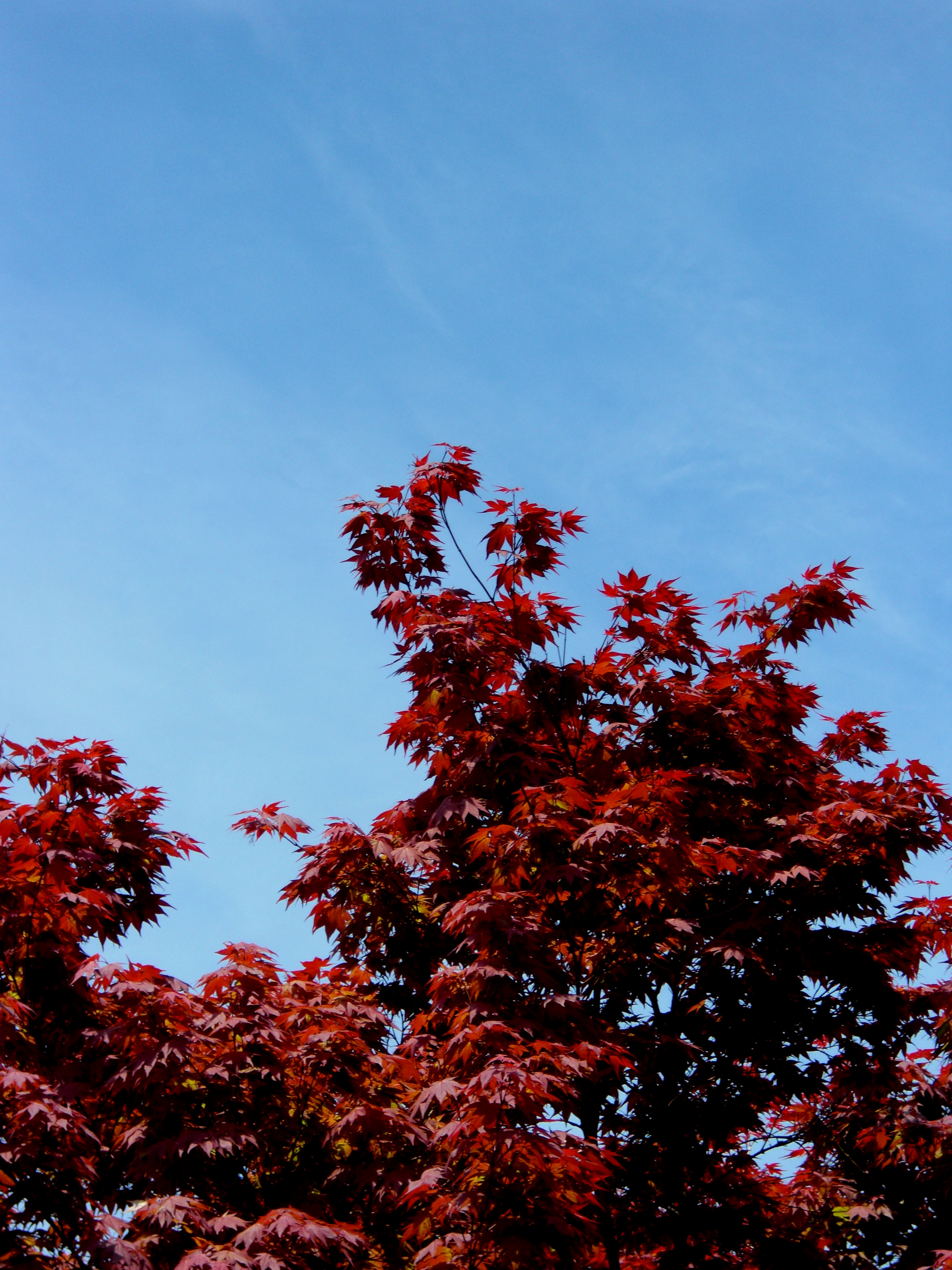 Fall, Red, Season, Sky, Trees, HQ Photo