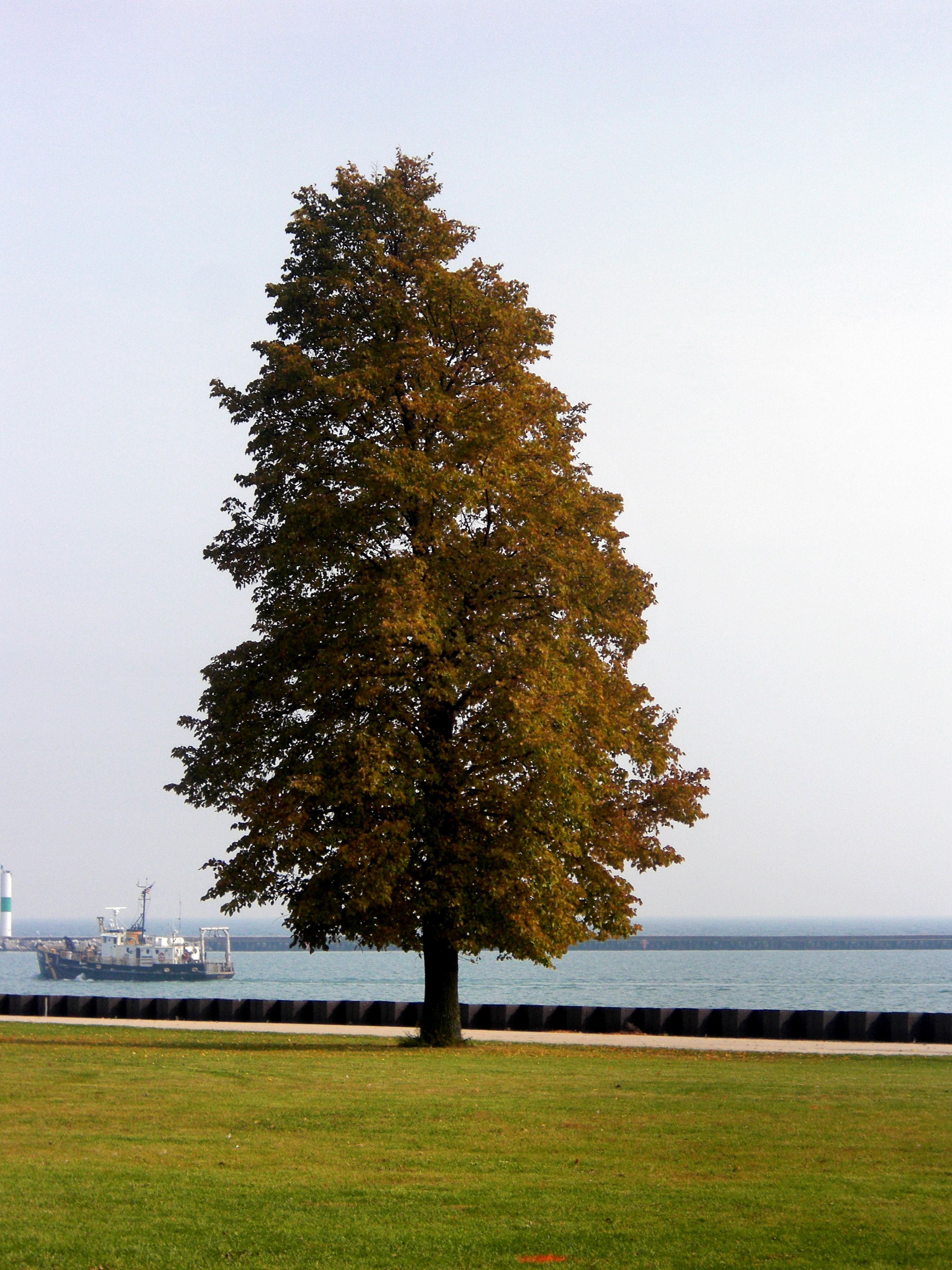 Fall, Ship, Water, Tree, Plants, HQ Photo