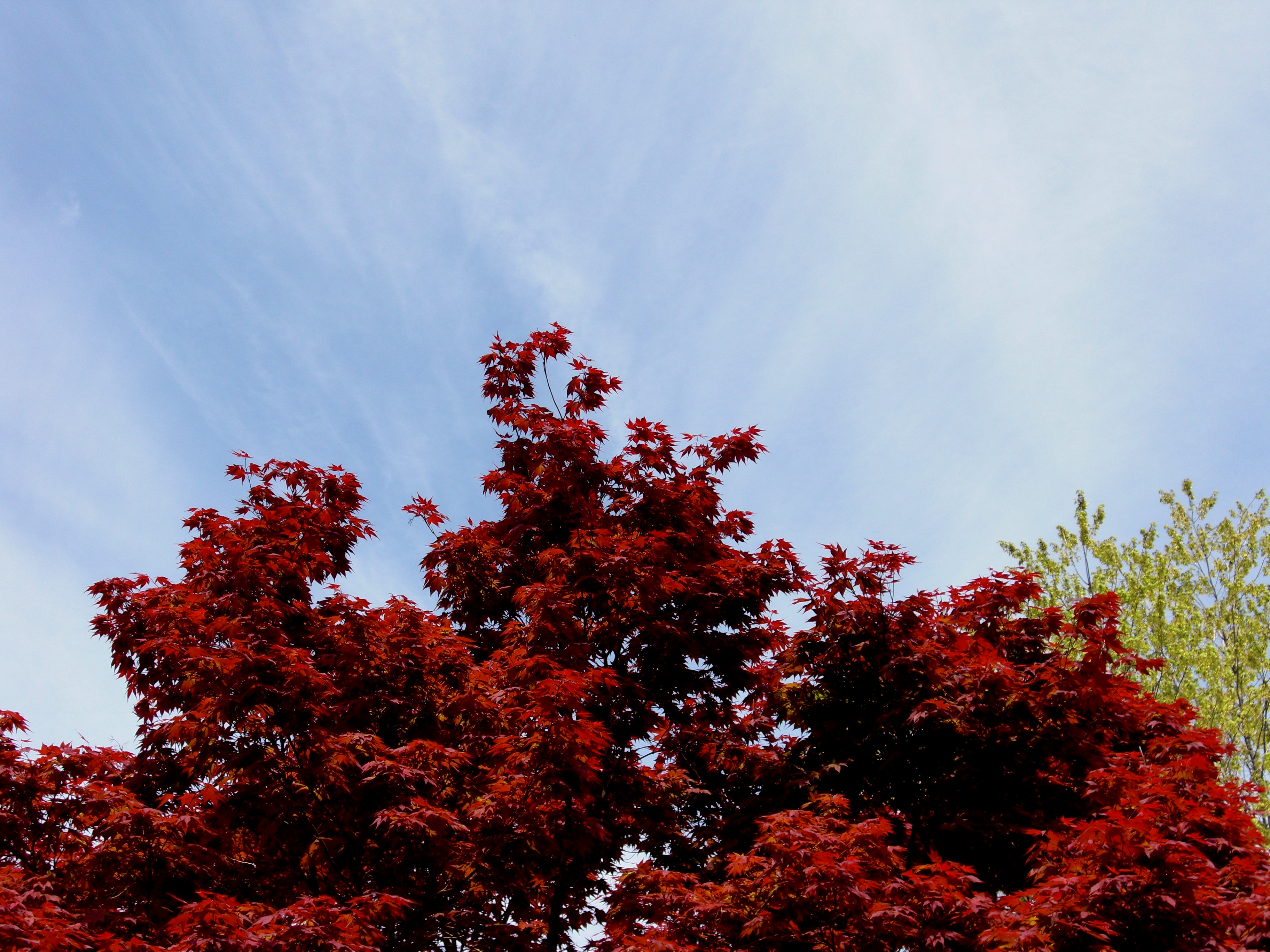 Fall, Season, Sky, Trees, Red, HQ Photo