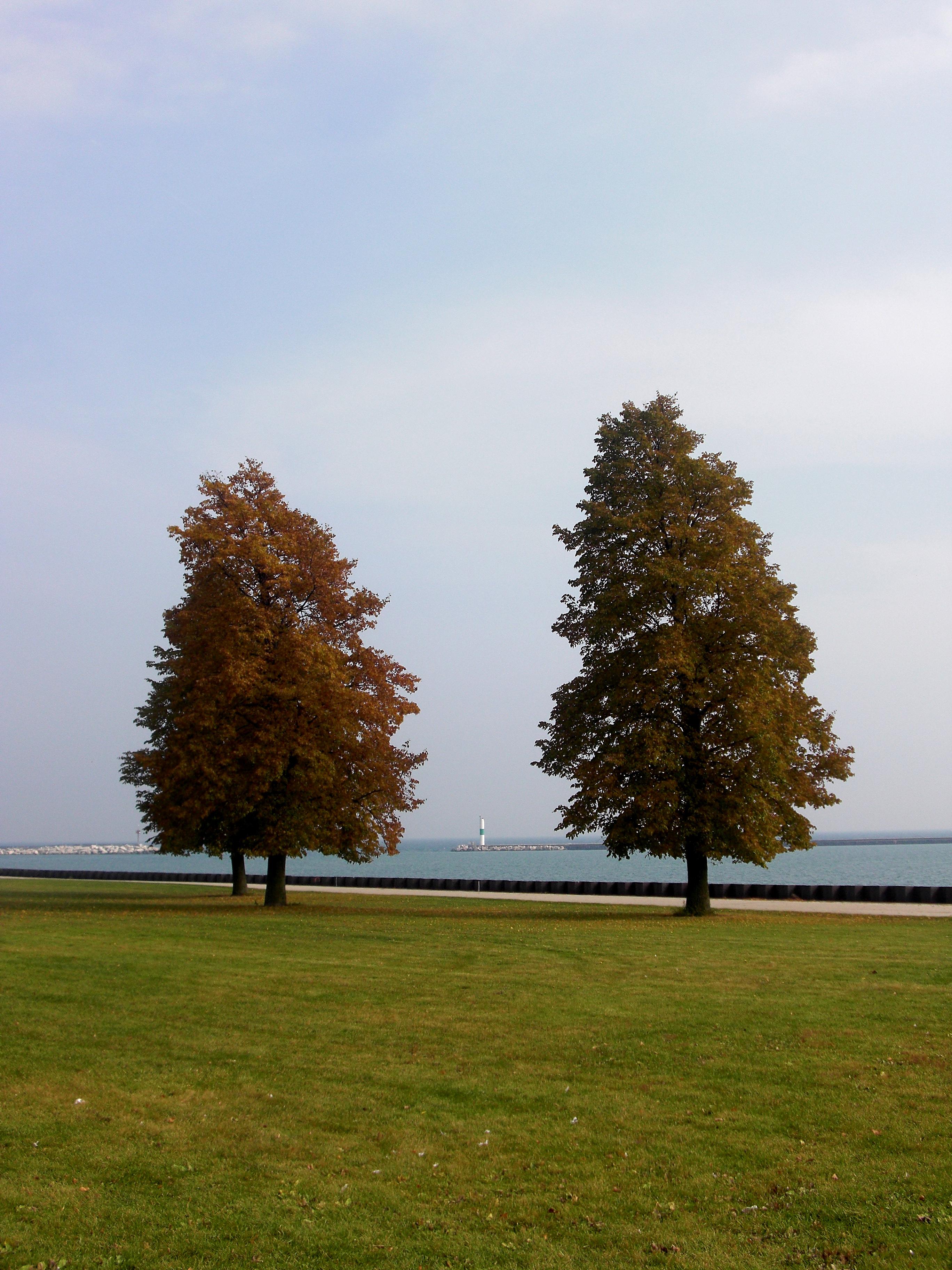 Fall, Autumn, Change, Changing, Field, HQ Photo