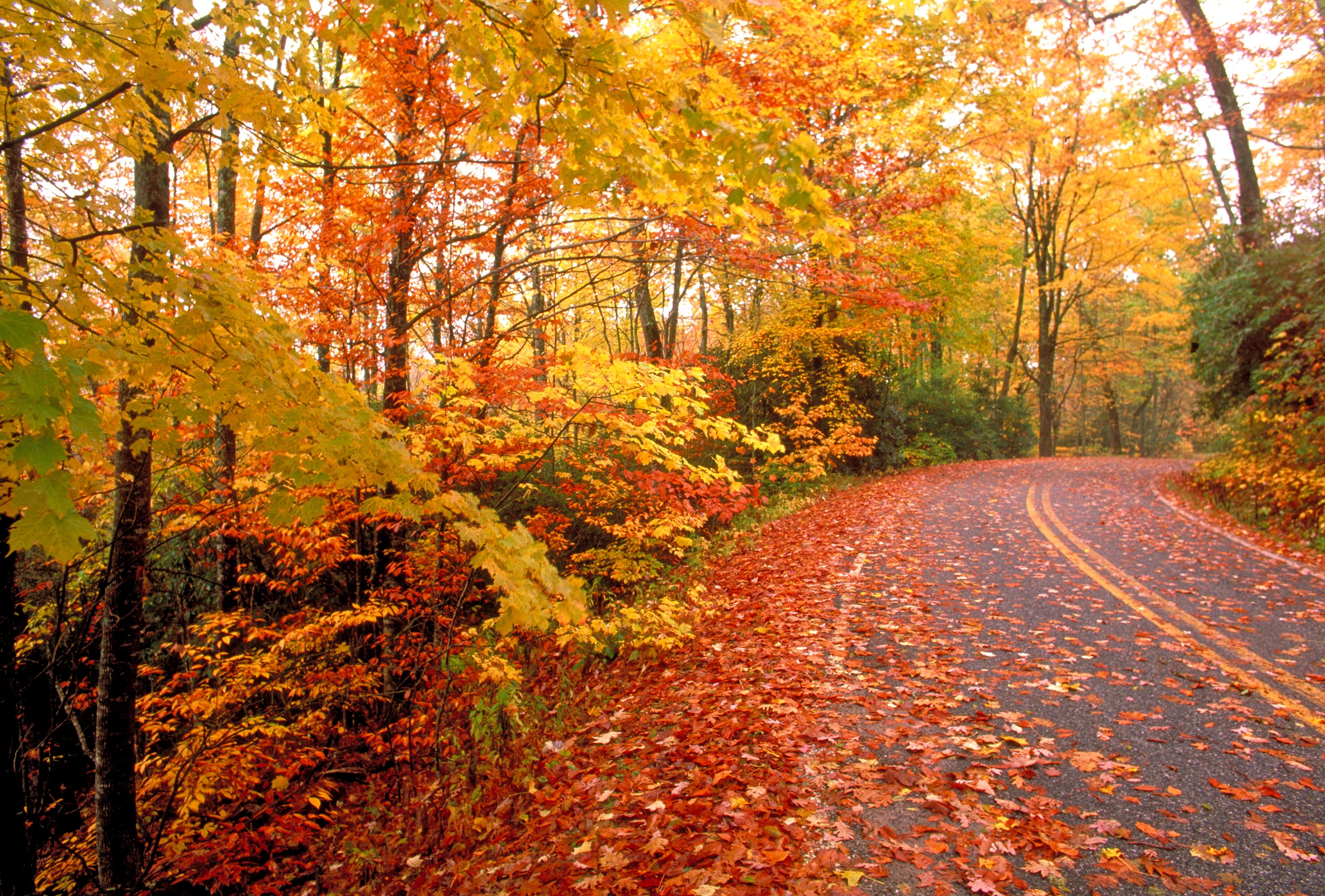 Fall Photography Themes | DesignContest