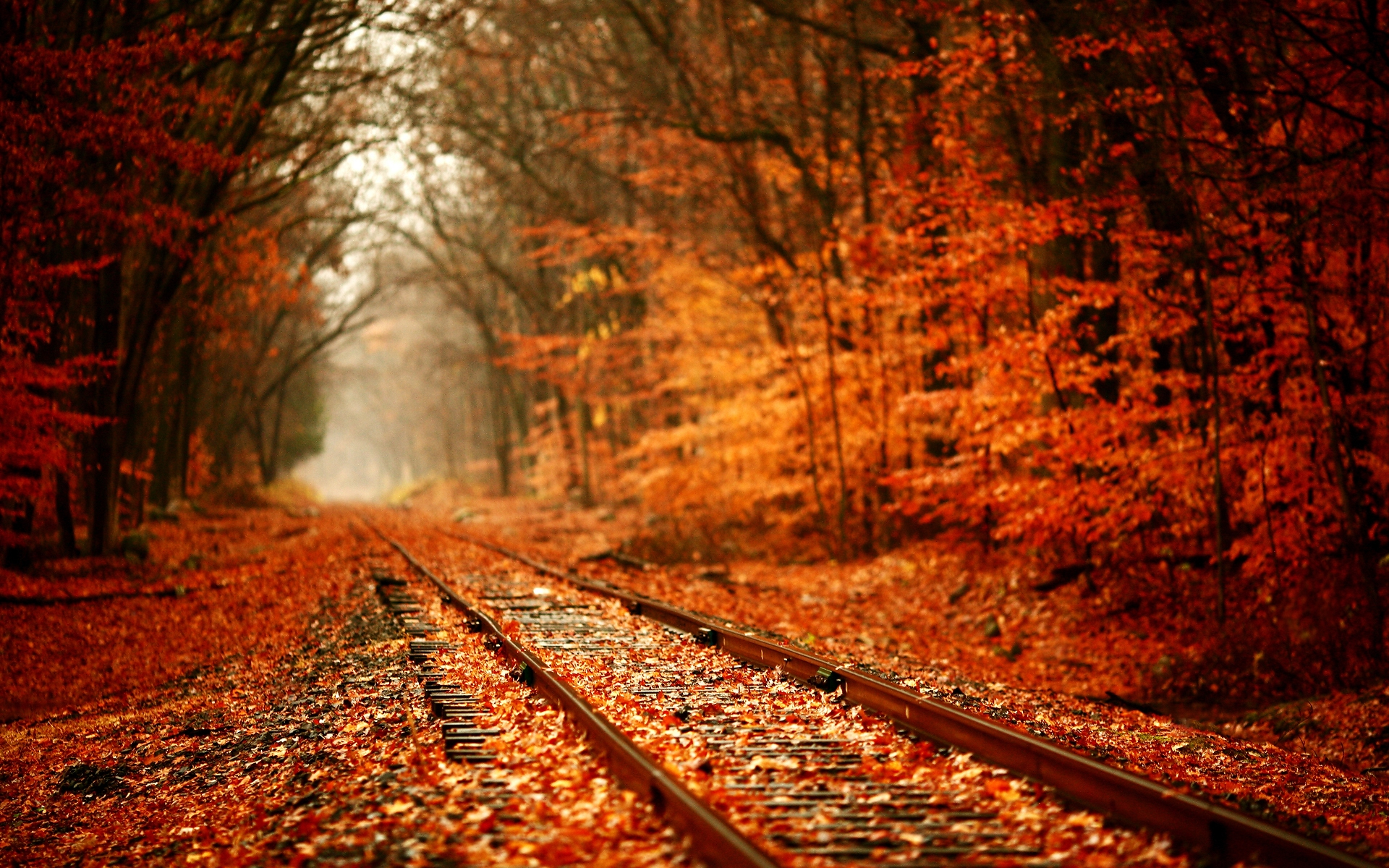 Photography Fall wallpapers (Desktop, Phone, Tablet) - Awesome ...