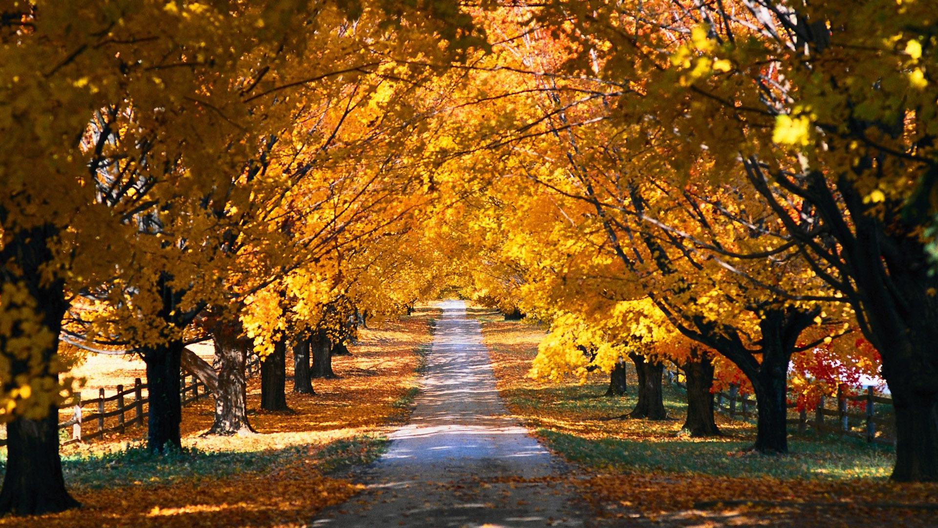 Travel Tuesday: Boston Fall Foliage