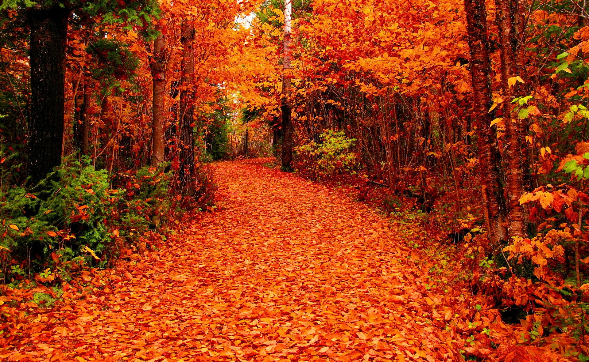 Forest: Beautiful Falling Season Autumn Foliage Fall Forest Road ...