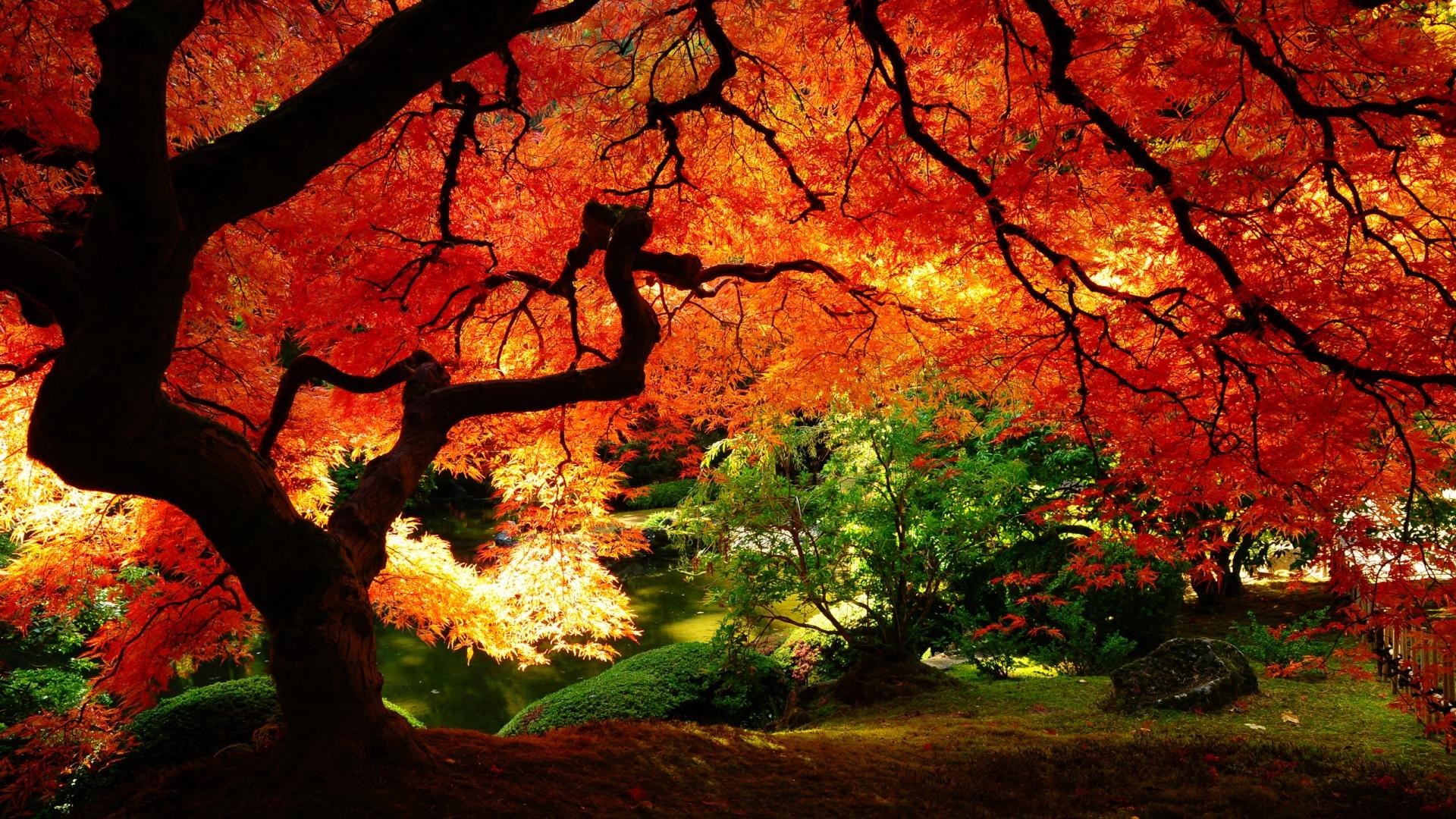 Fall Nature Photos #7017375