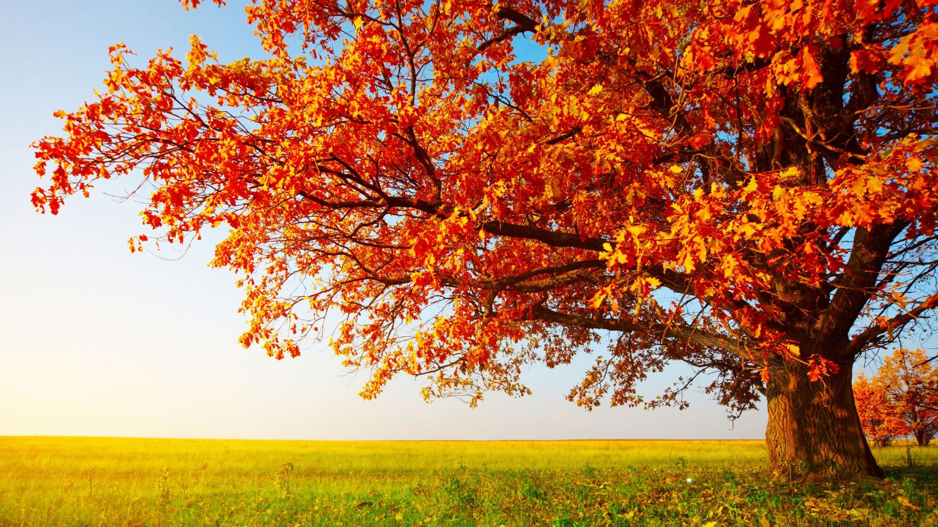 fall, sky, nature, tree, leaves, blue, orange, calm, green, shadow ...