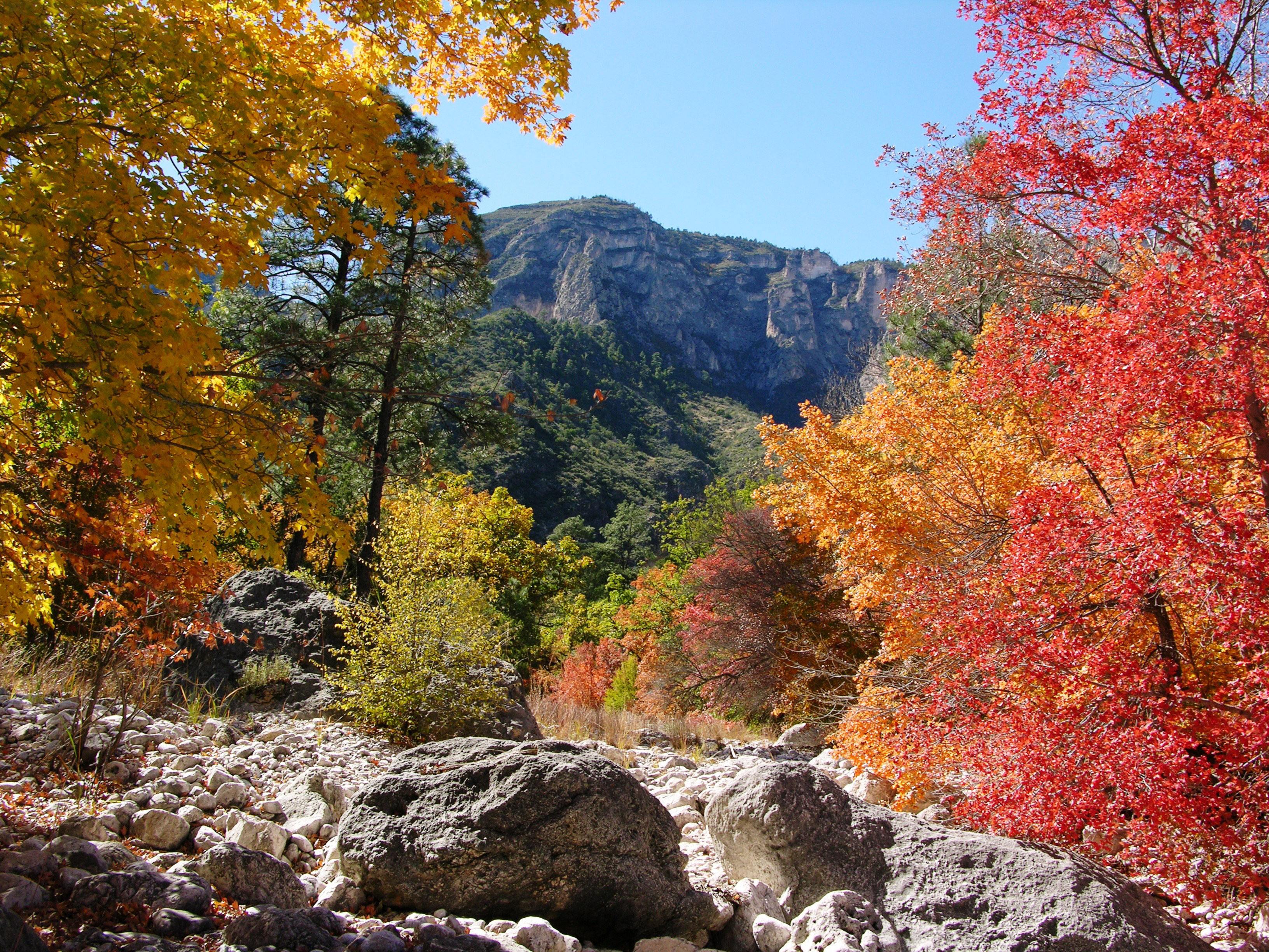 Fall Colors Report - Guadalupe Mountains National Park (U.S. ...