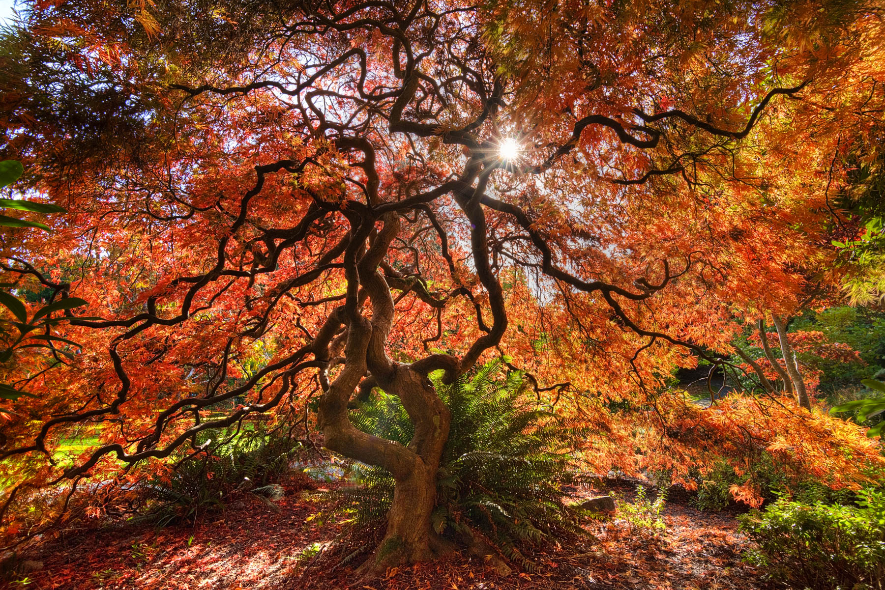 11 stunning locations to view the Fall colours in Victoria (PHOTOS)