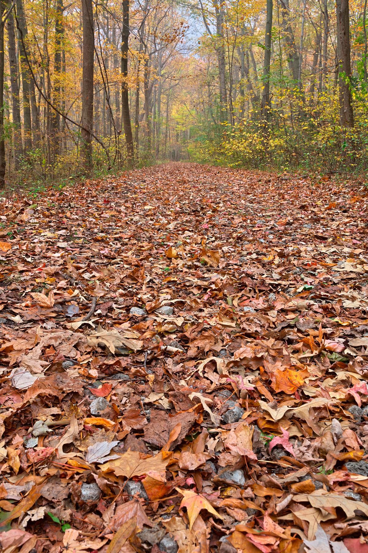 Fall ferry grove trail - hdr photo