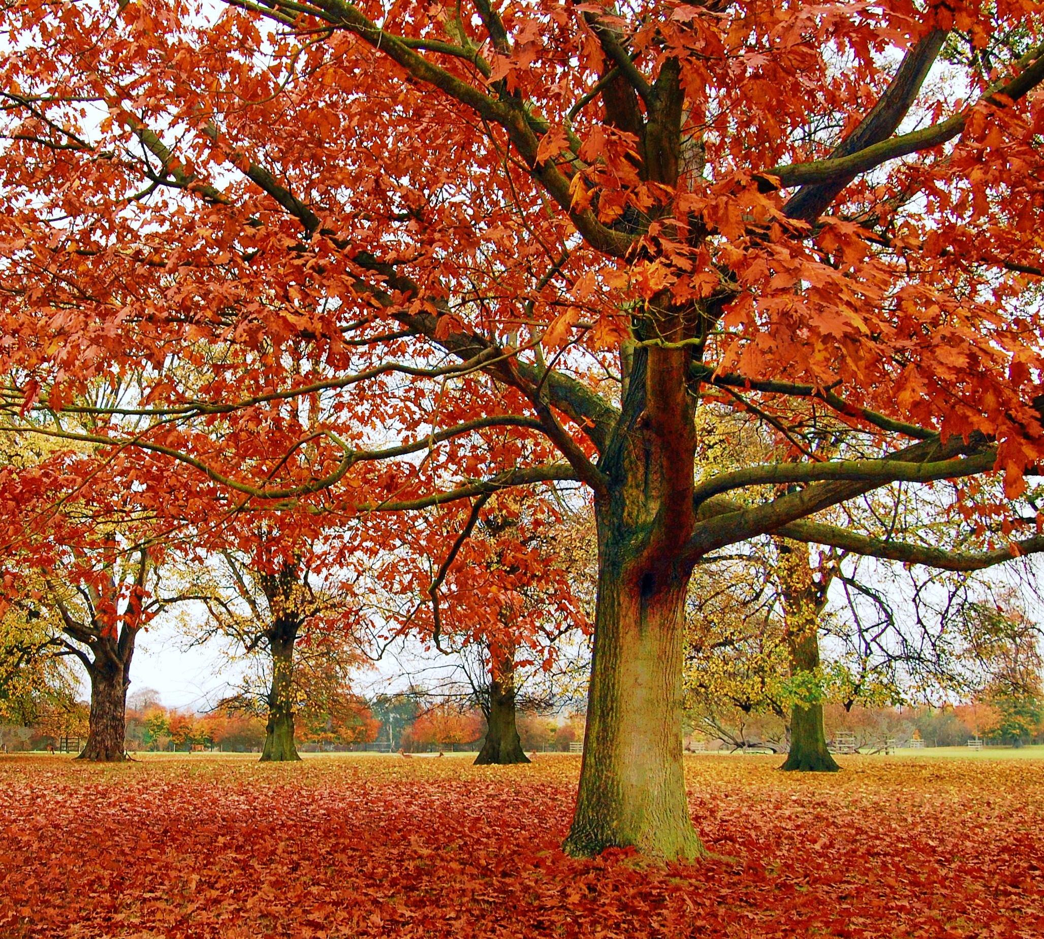 Fall leaves photo