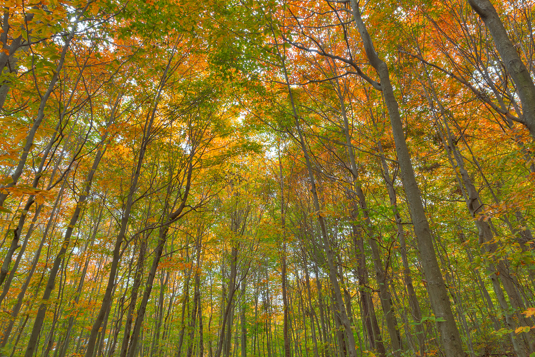 Fall Forest Foliage - HDR, Scenery, State, Somadjinn, Sky, HQ Photo