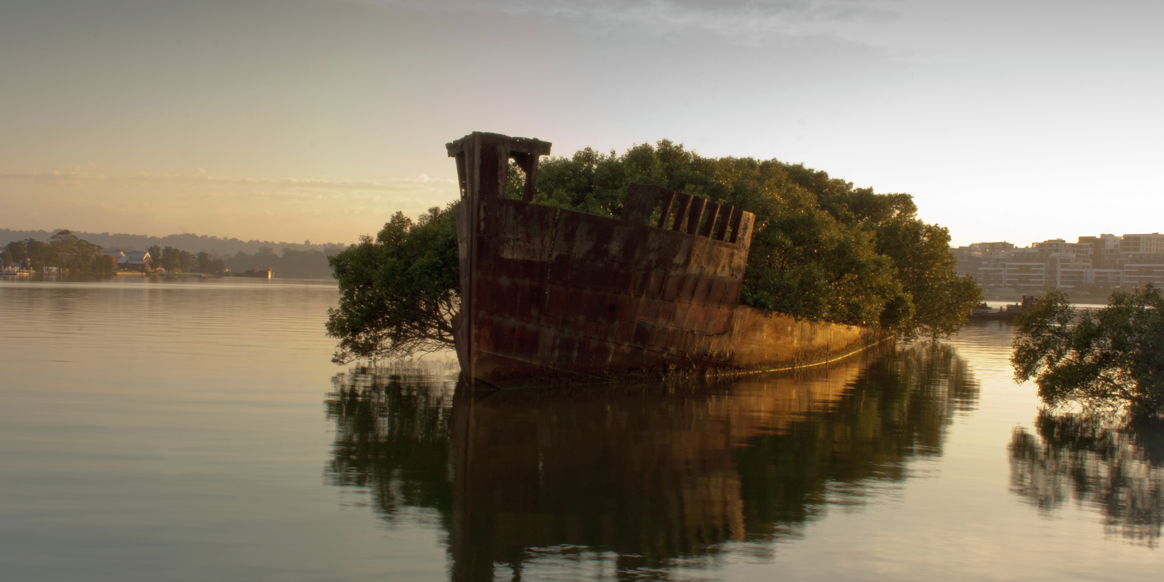 Floating Mangrove Forest Springs Up in a Wrecked Coal Ship ...