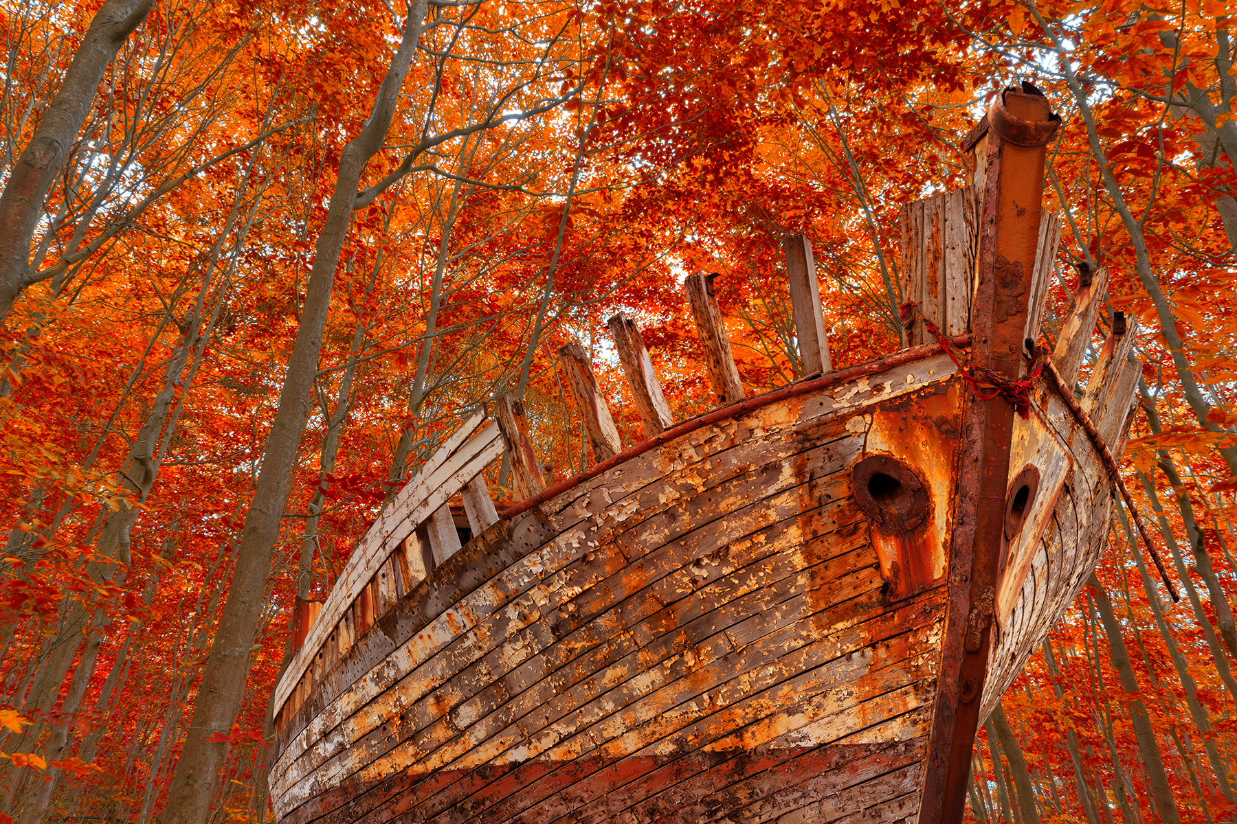 Fall Forest Shipwreck, Abandoned, Outdoors, Ruins, Ruin, HQ Photo