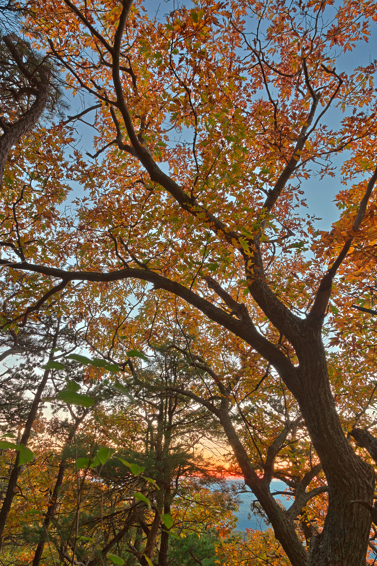 Fall forest sunset - hdr photo