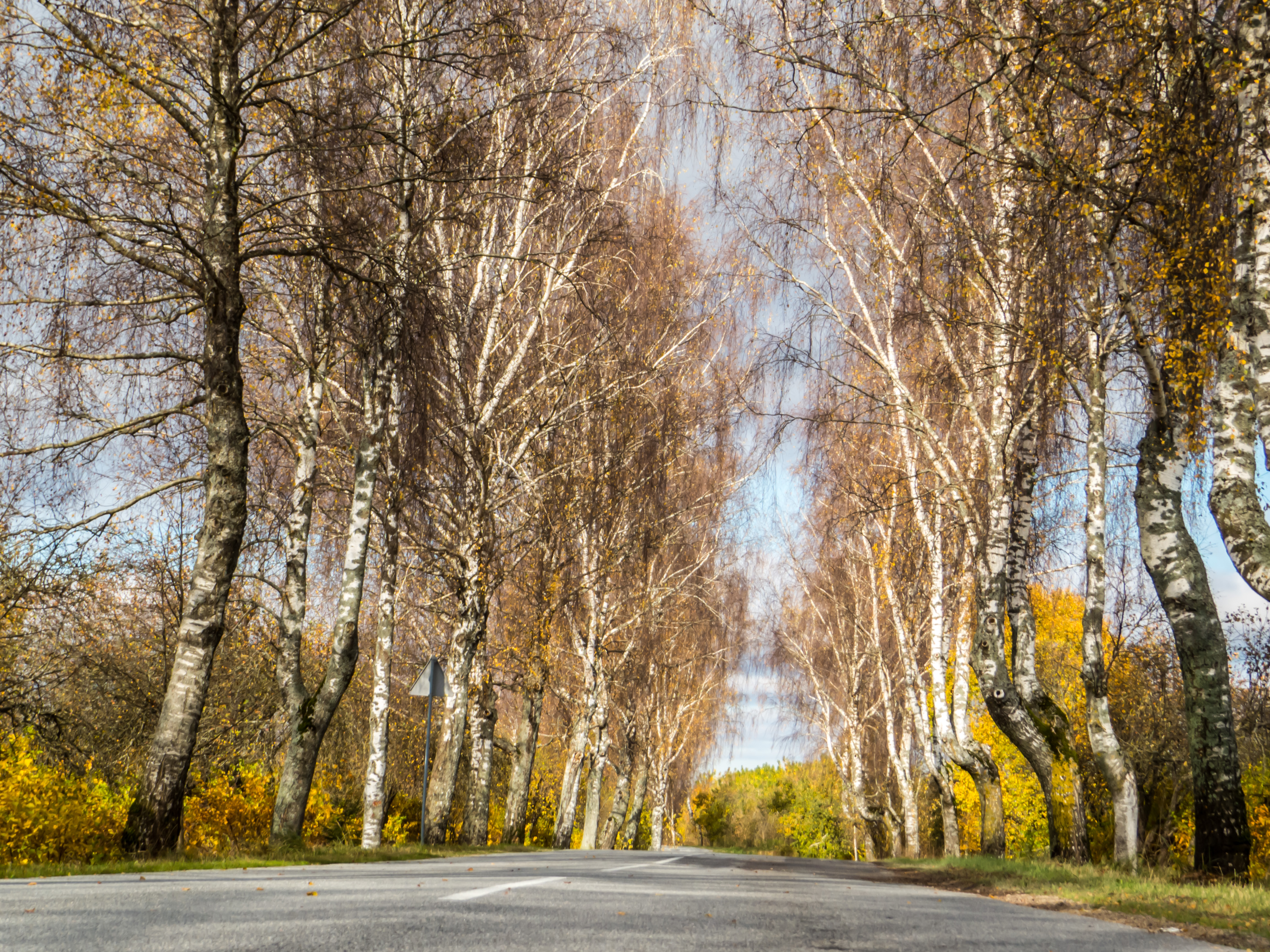 Fall from the mid of the road, Alley, Latvia, Sunny, Street, HQ Photo