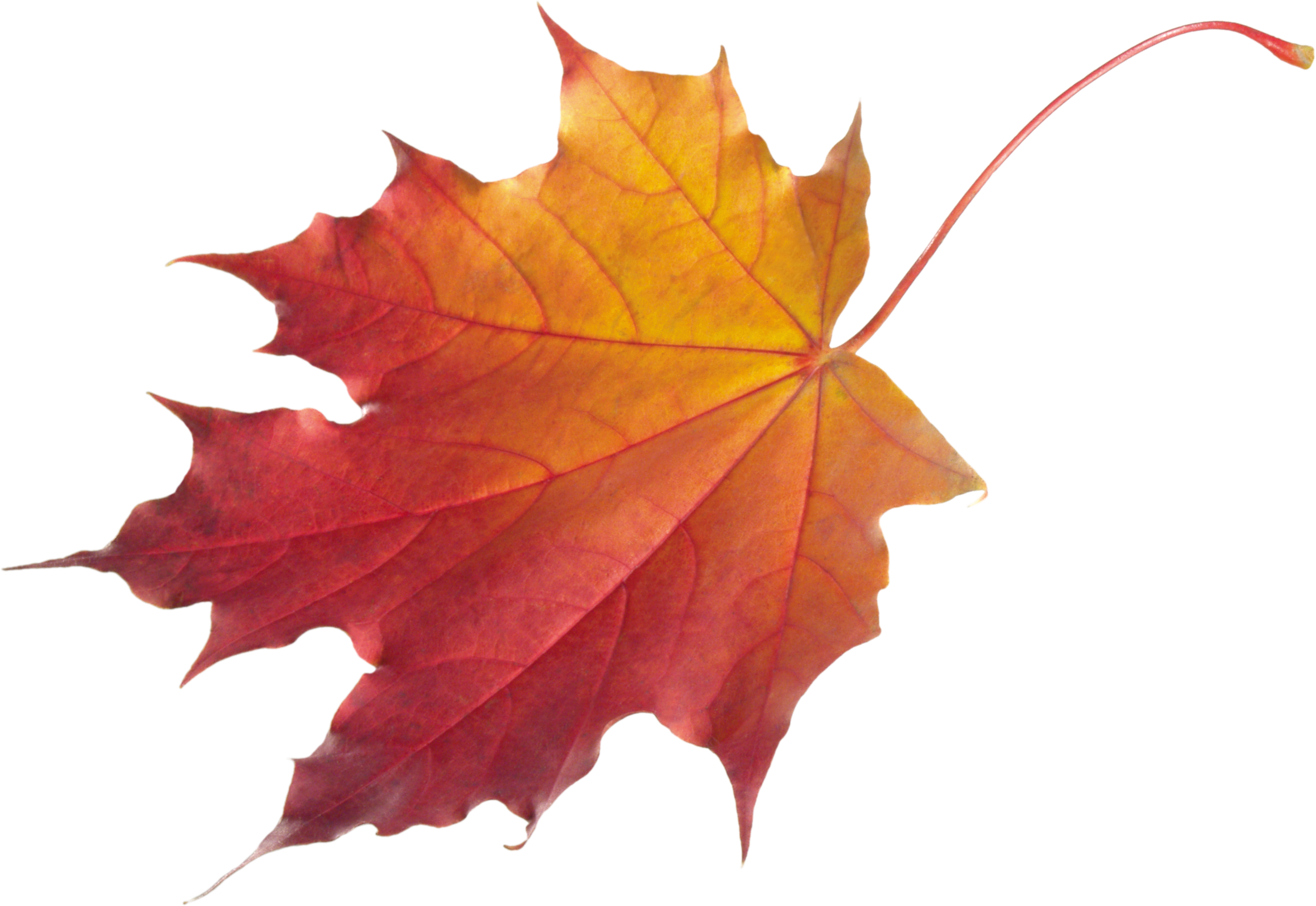 Autumn Leaves HD PNG Transparent Autumn Leaves HD.PNG Images. | PlusPNG