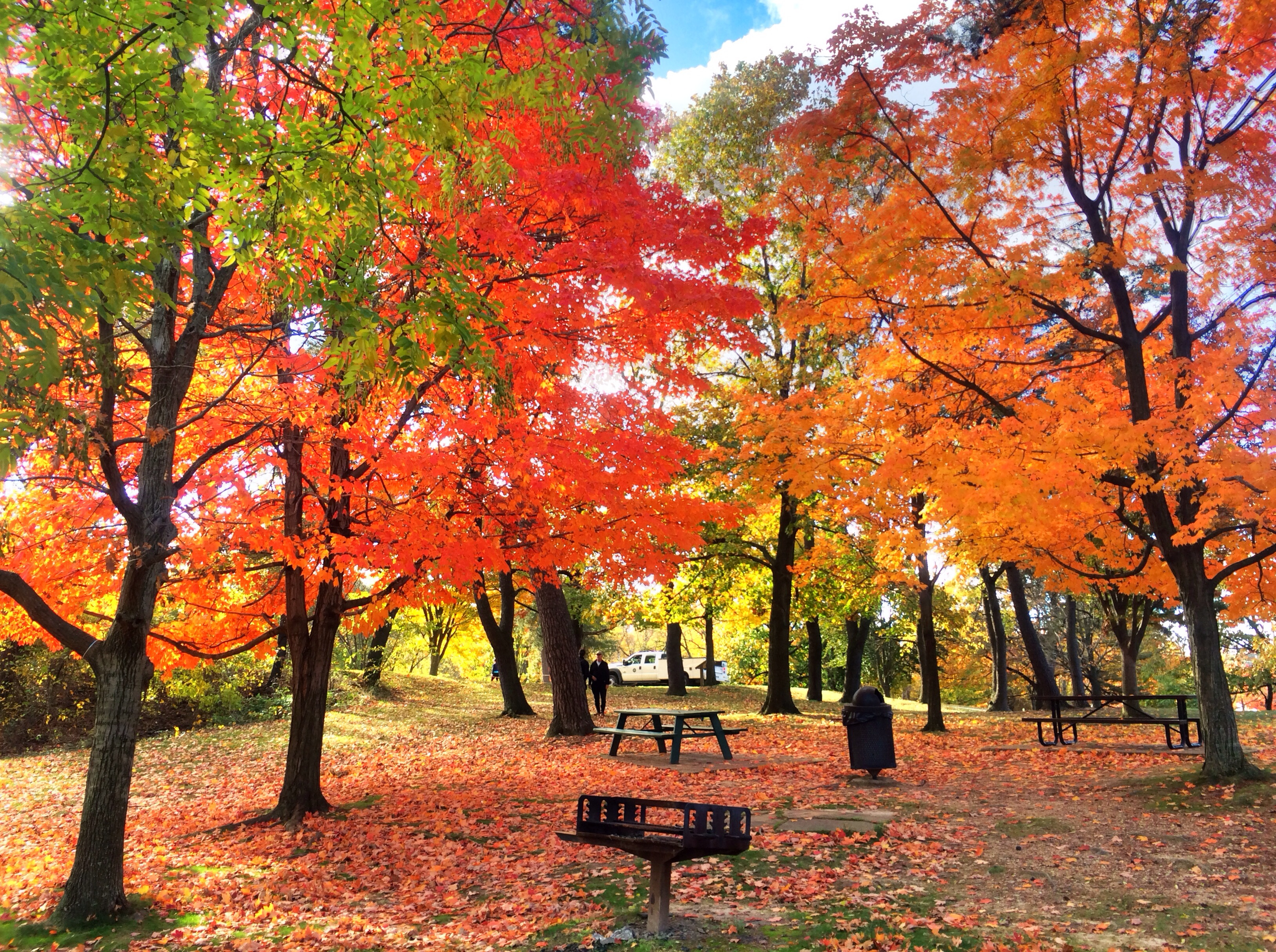 Your Guide to Fall Leaf Peeping in Alexandria, VA