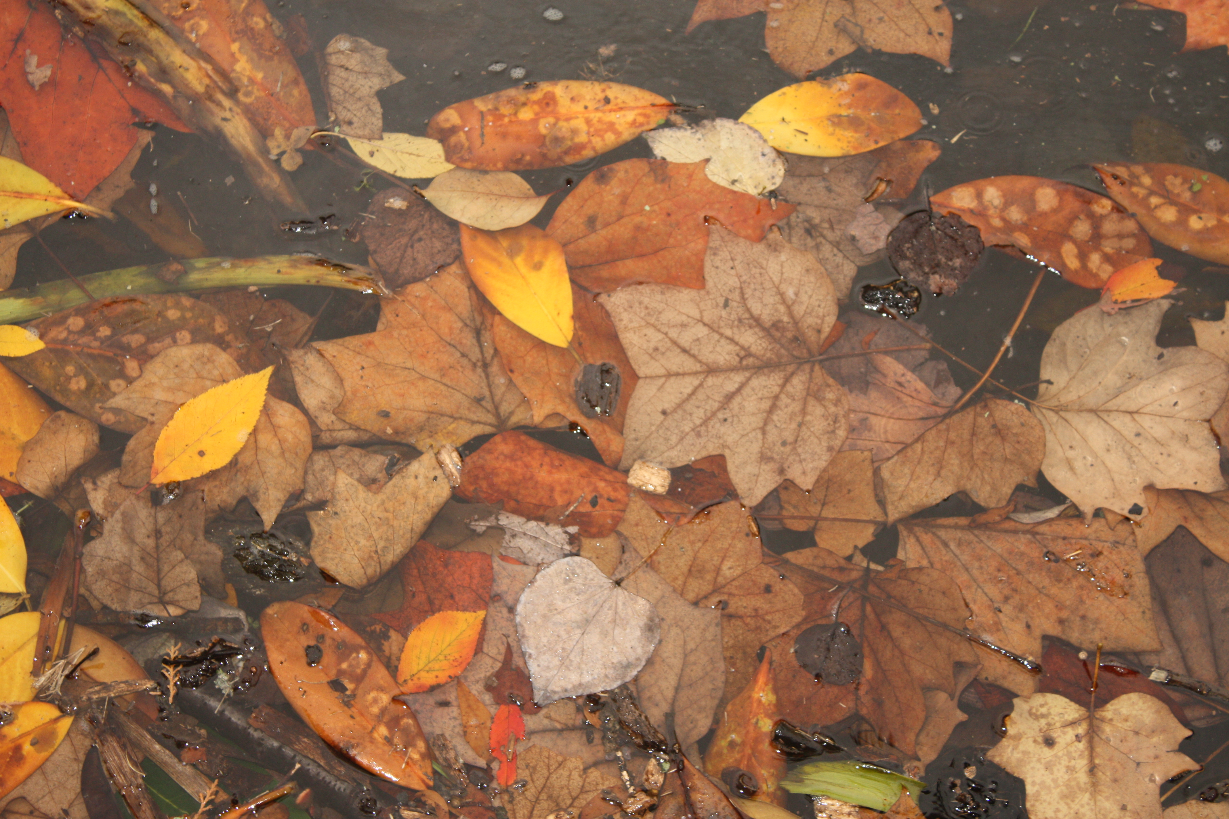 Fall leaves, Red, Yellow, Water, Orange, HQ Photo