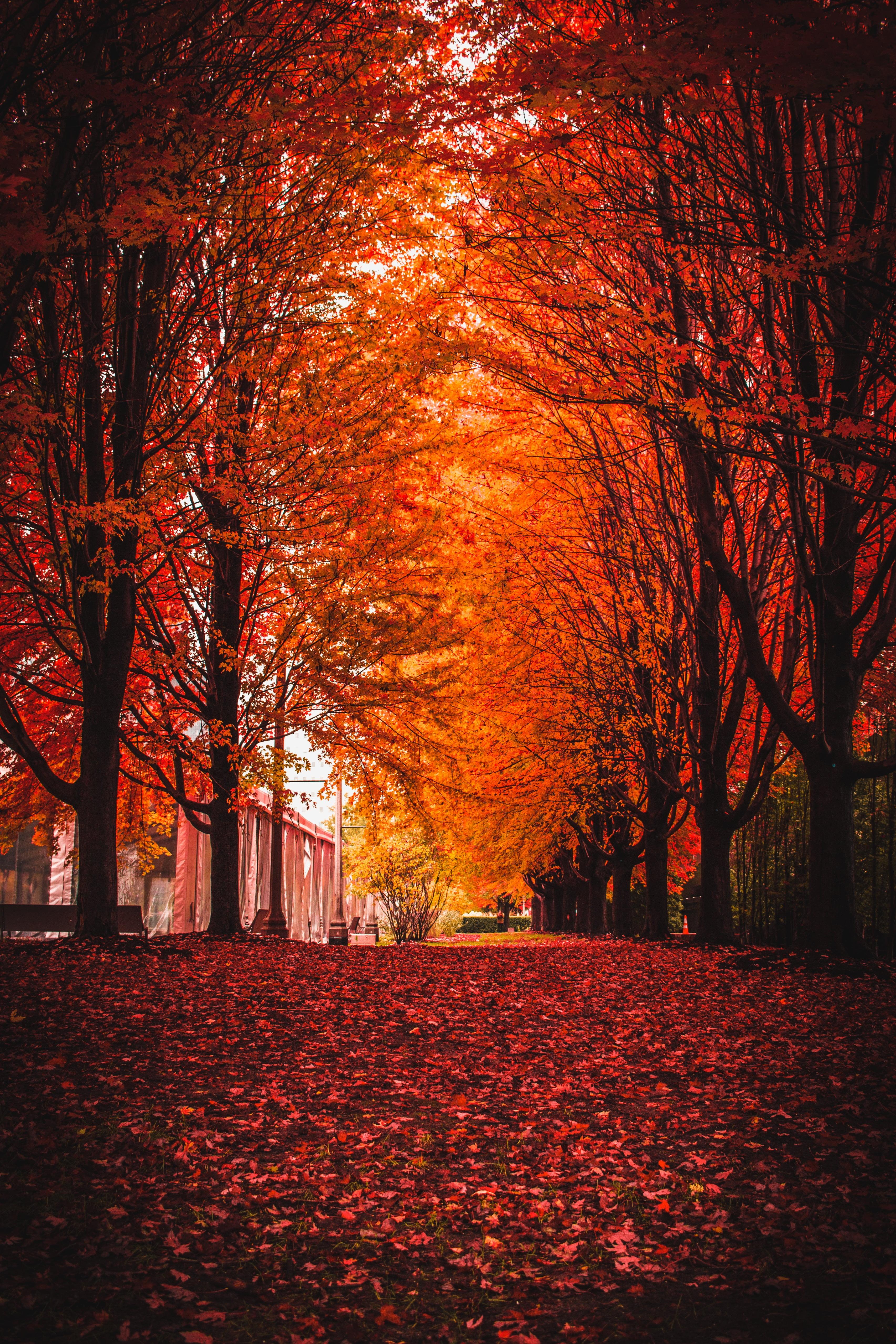 Fall season photograph, Autumn, Park, Trees HD wallpaper   Wallpaper ...