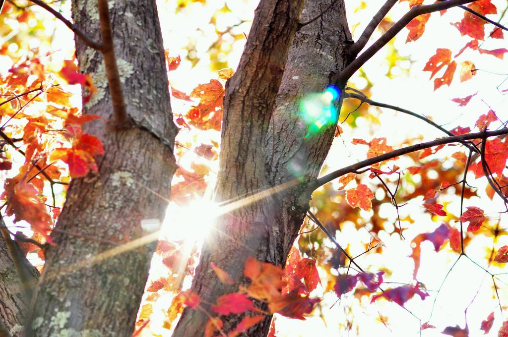 Fall season, Autumn, Natural, Turning, Tree, HQ Photo