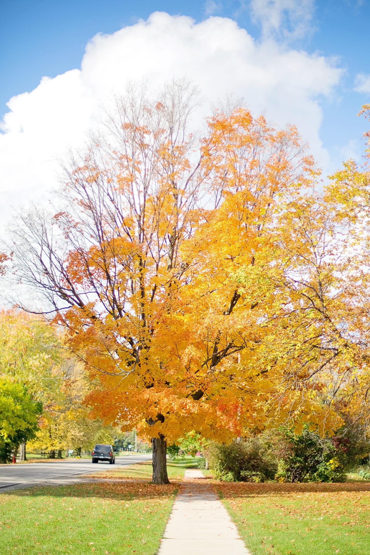 Fall Season, Autumn, Dry, Fall, Fallen, HQ Photo